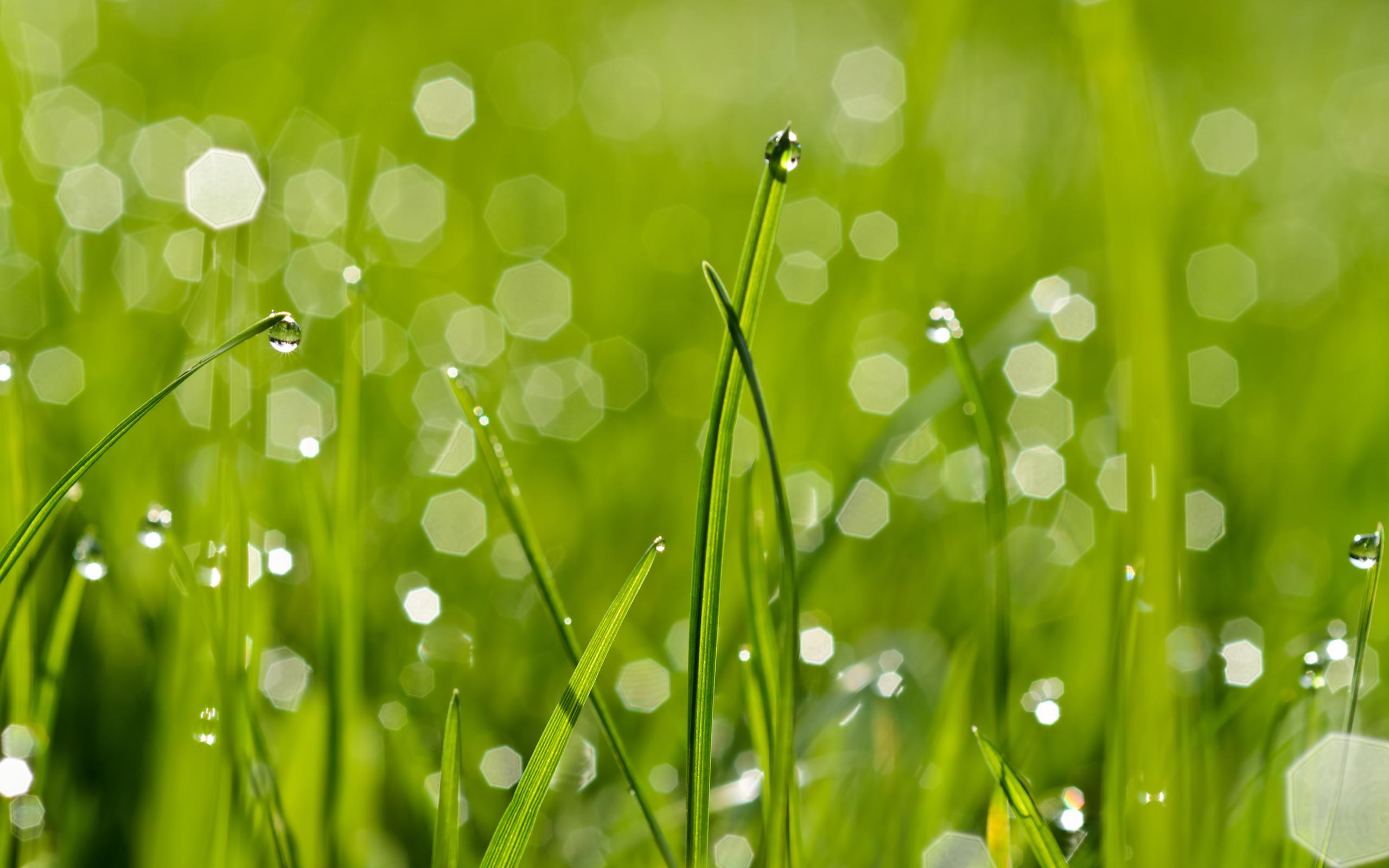природа роса вода капли макро трава nature Rosa water drops macro grass бесплатно