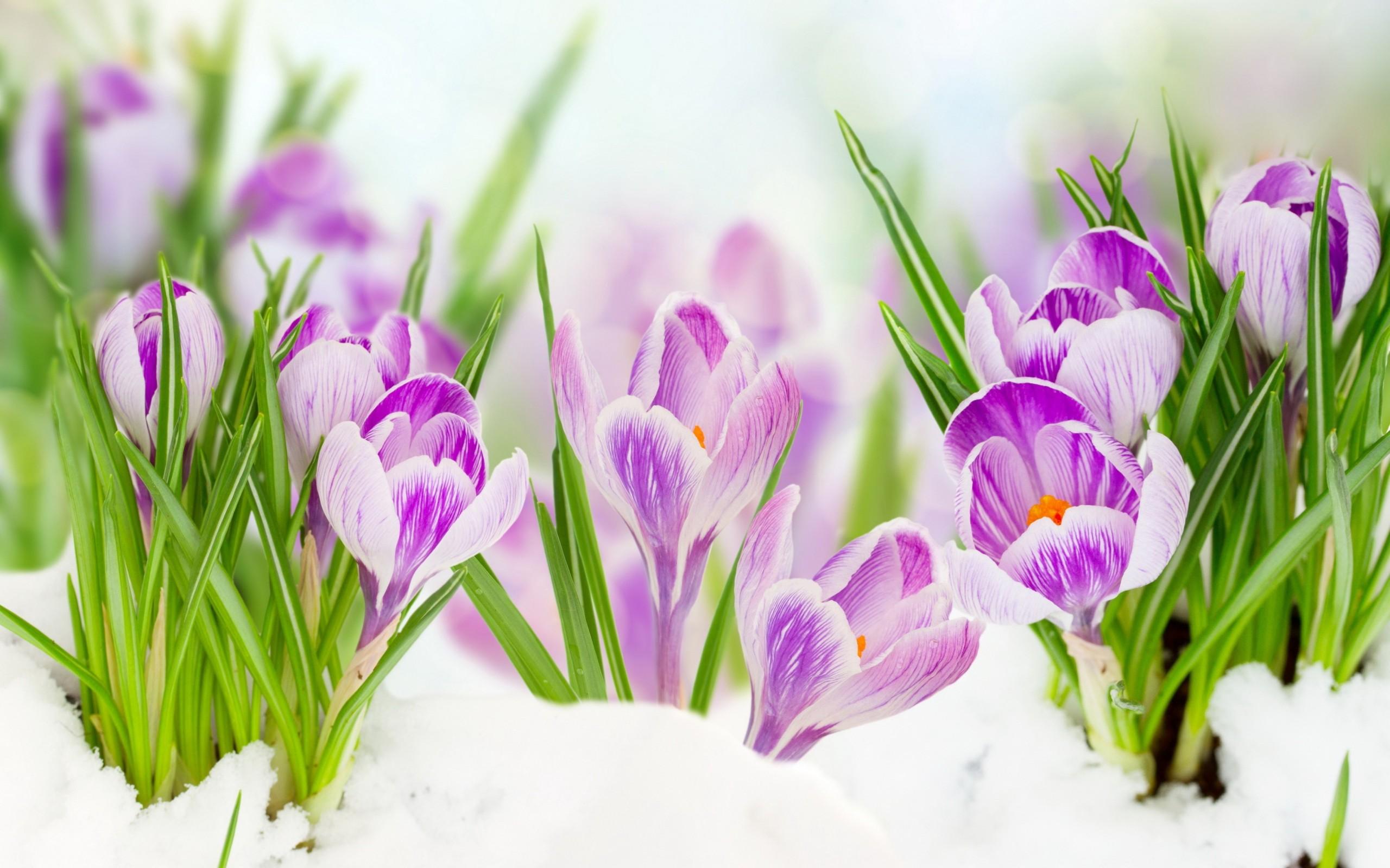 Скайпа приколы, открытка весна цветы