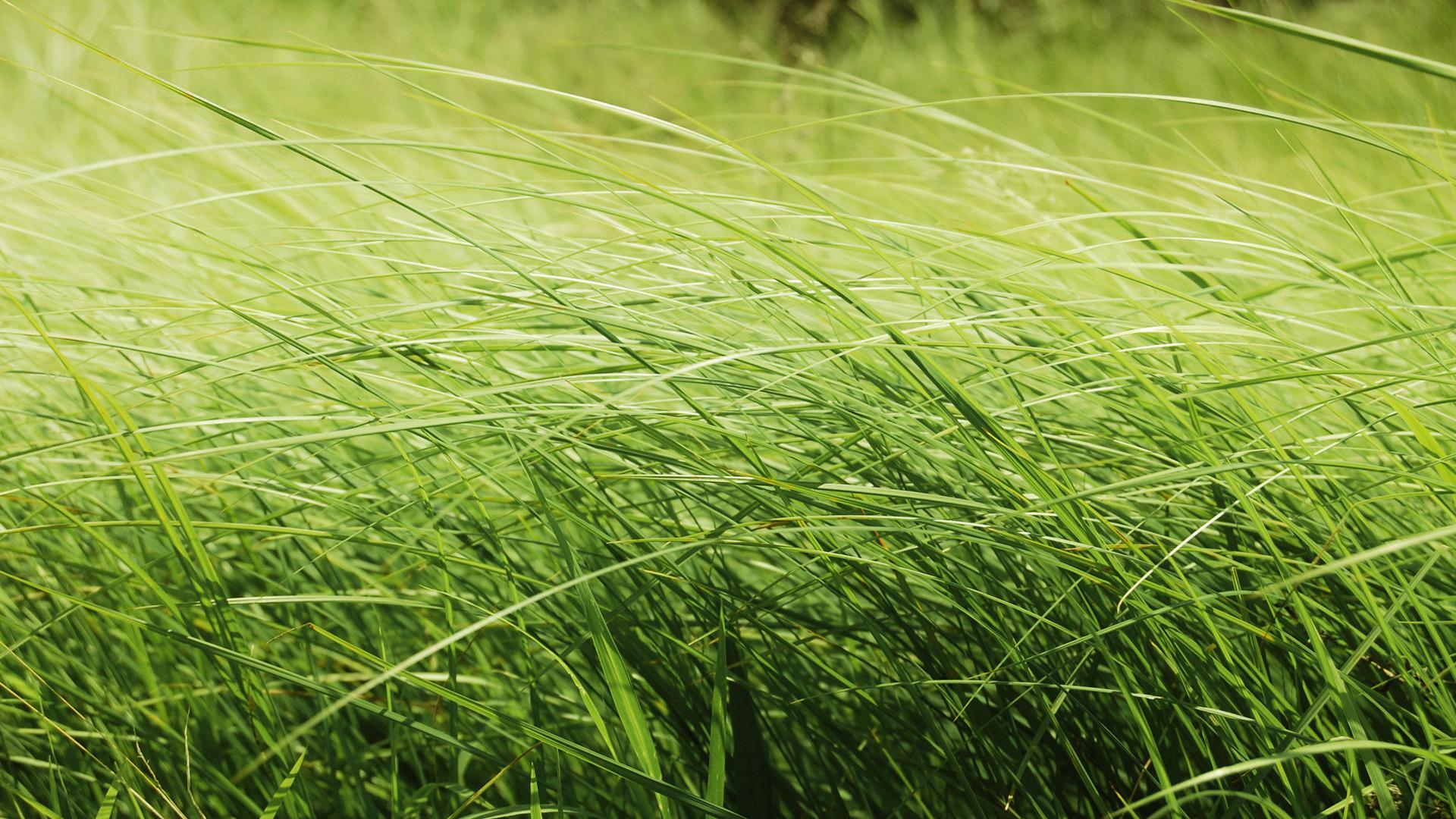 Травы в поле онлайн