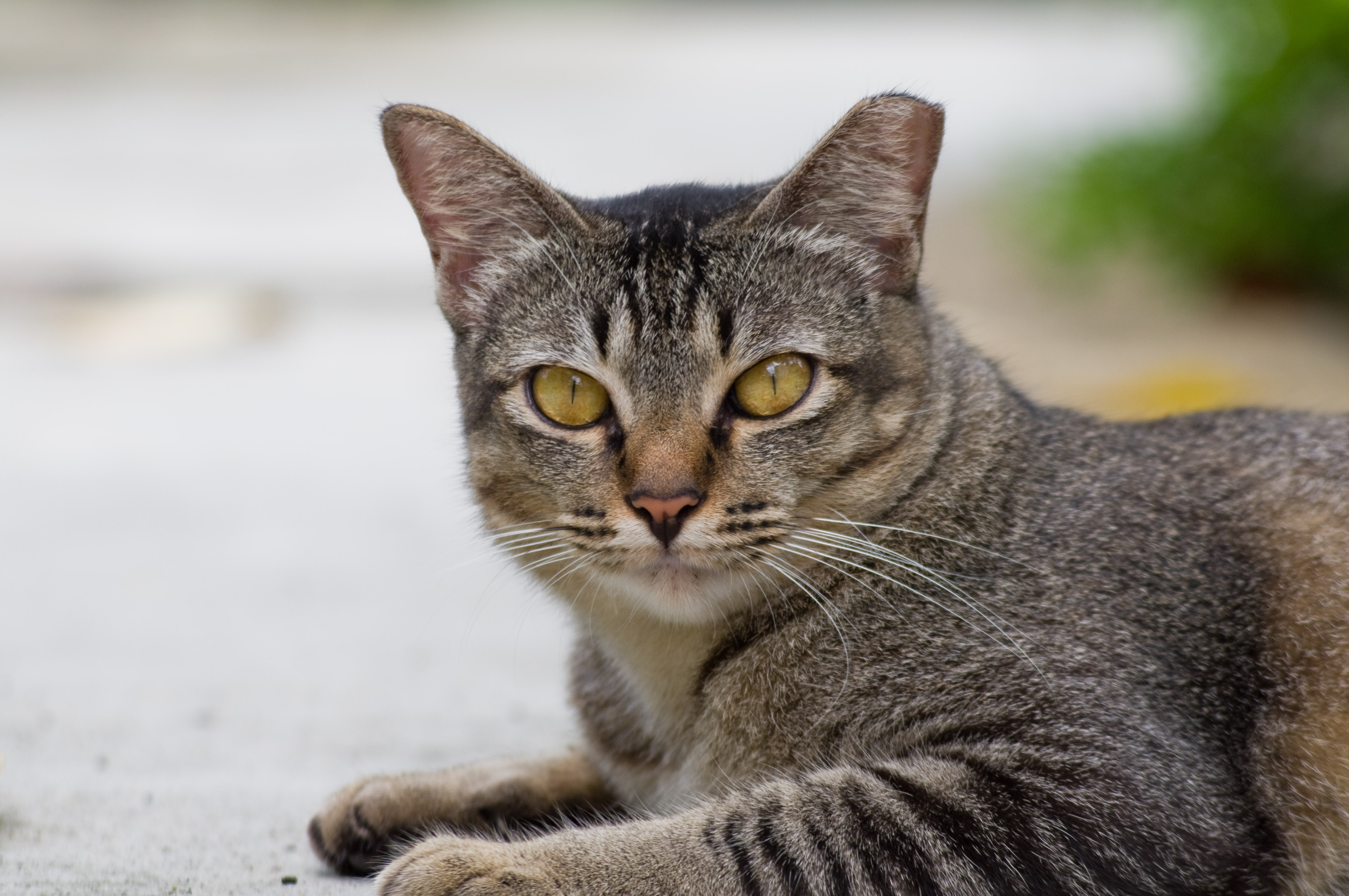 Открытке, картинки котяра