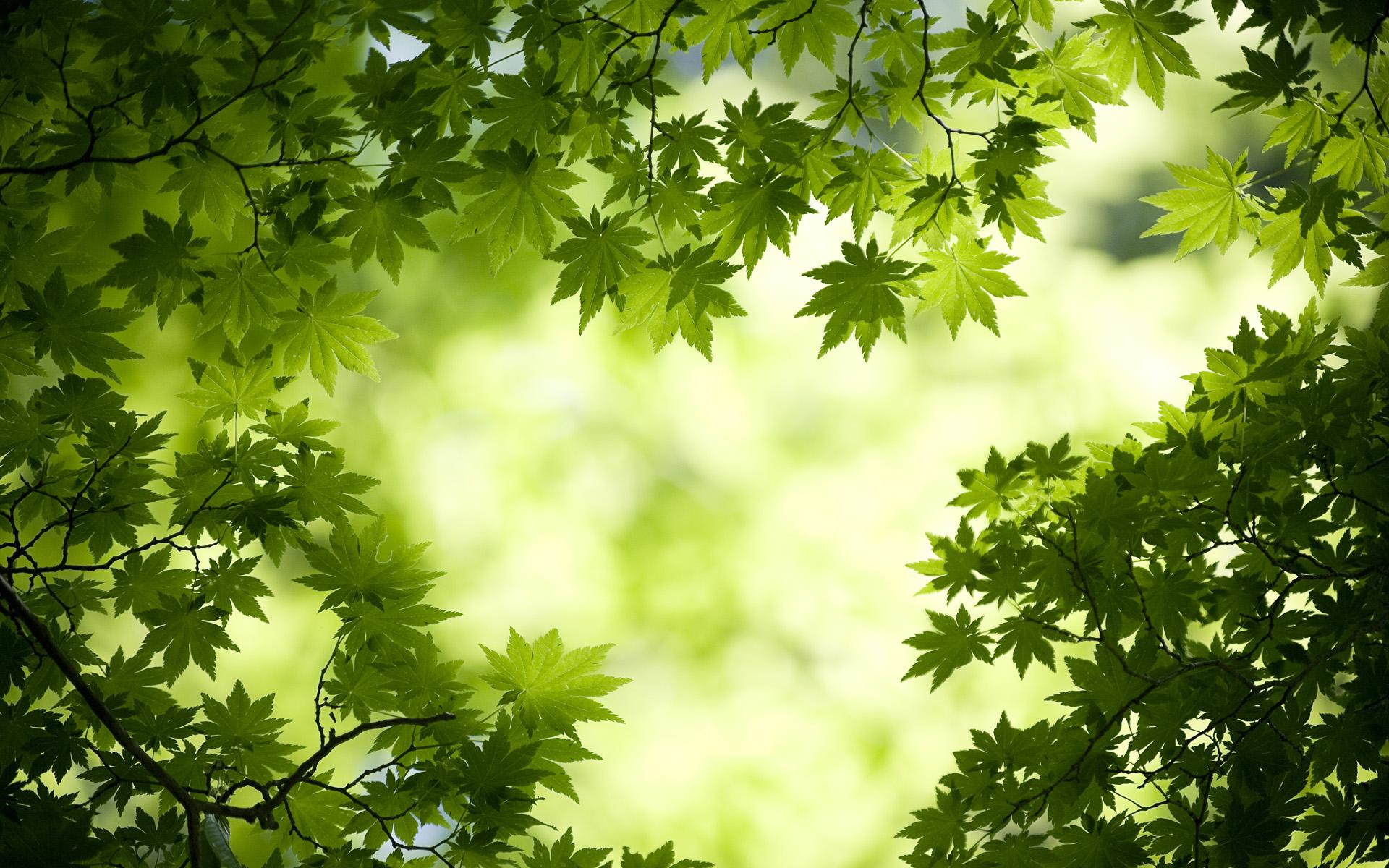 Зелень деревья листва загрузить