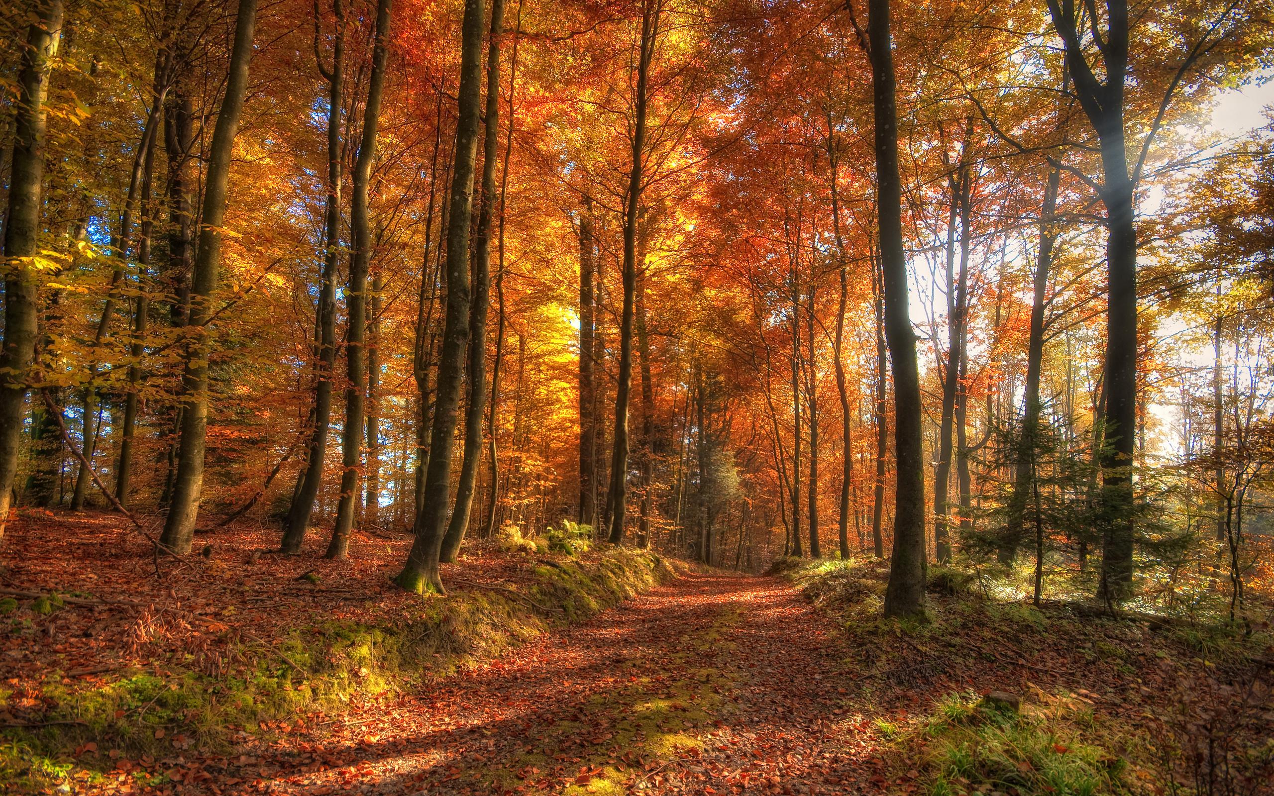 Картинки аватарки, картинки осенний лес на рабочий стол