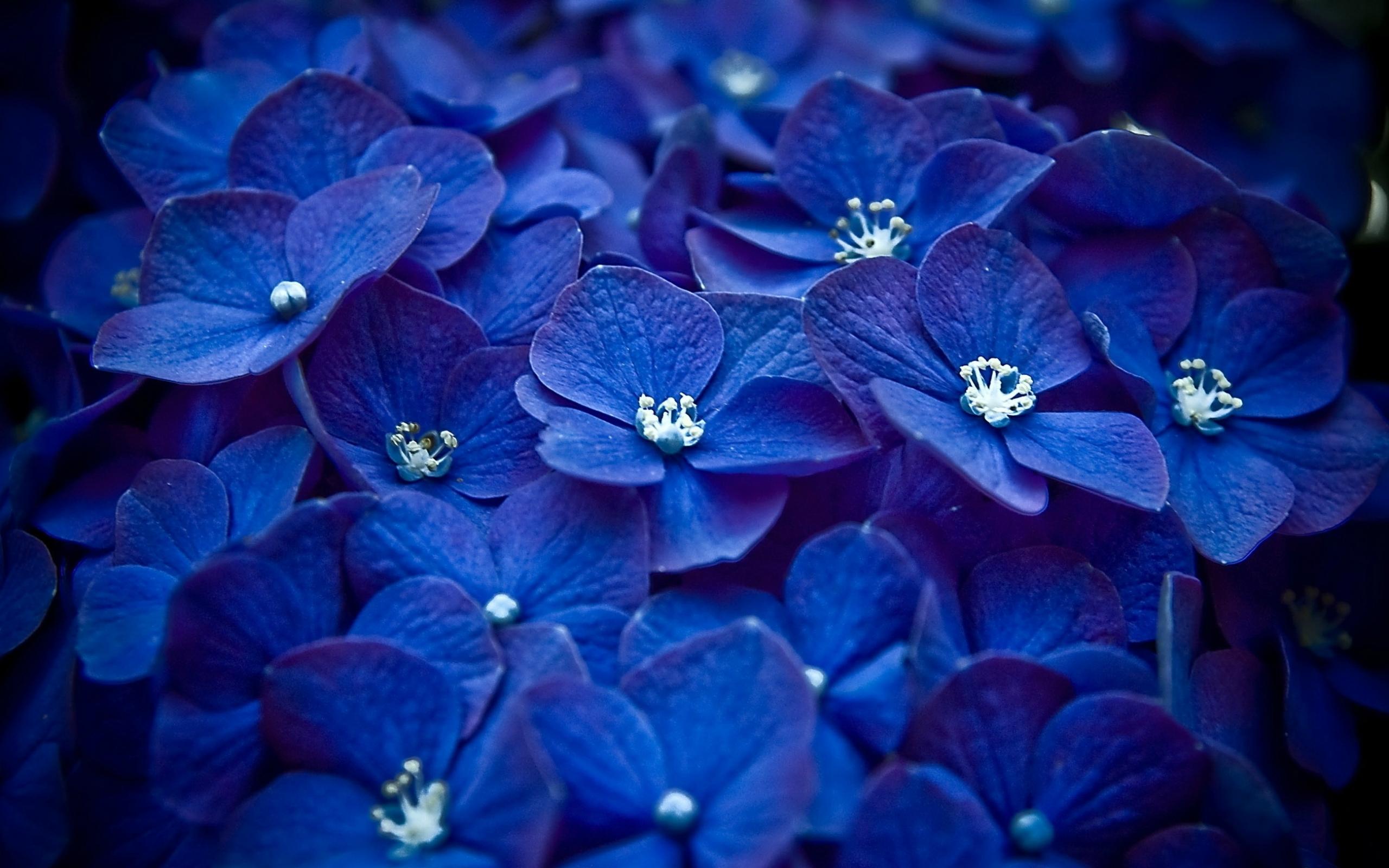 природа синие цветы nature blue flowers  № 1376540 загрузить