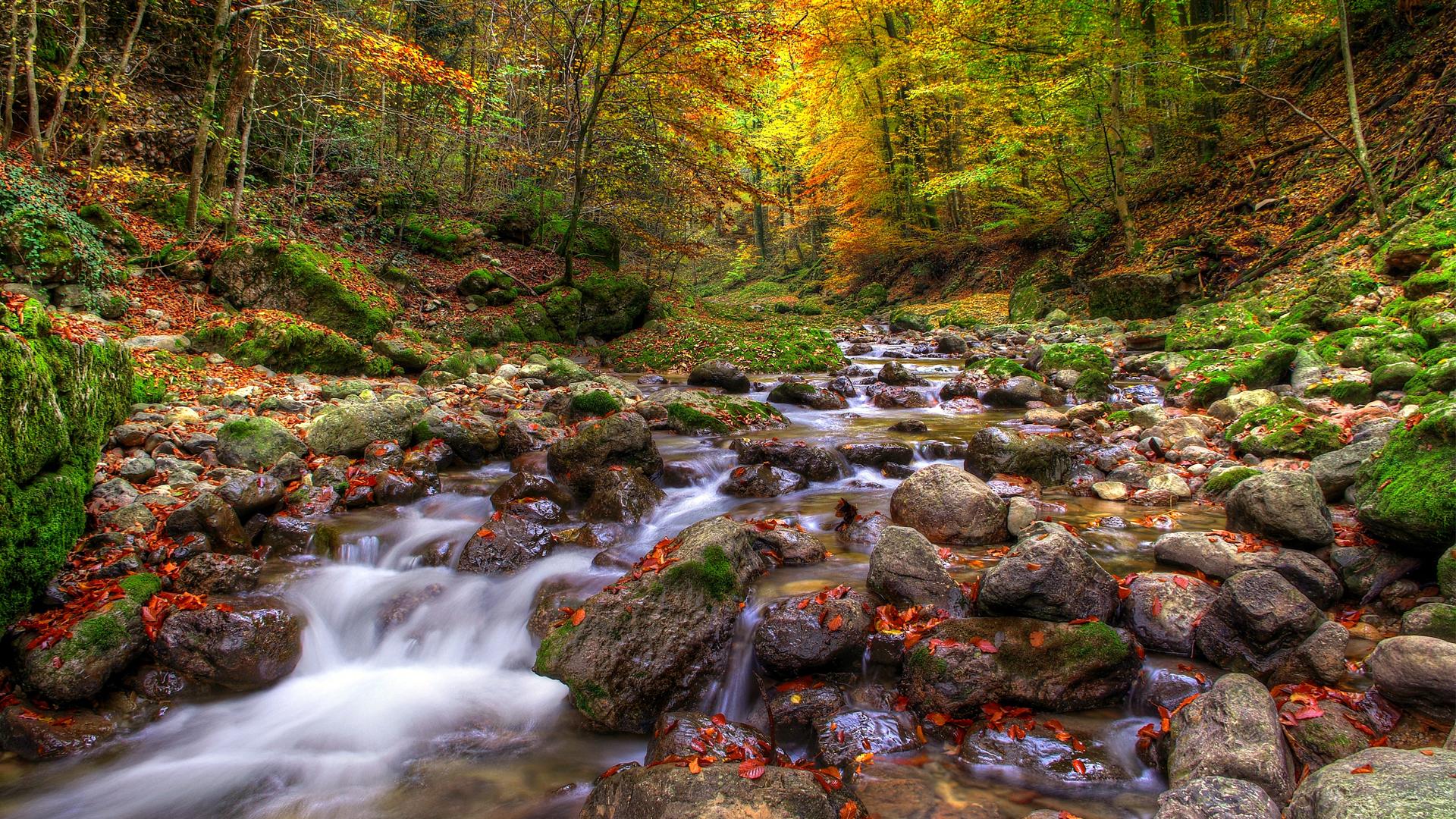 природа река листья осень лес деревья бесплатно