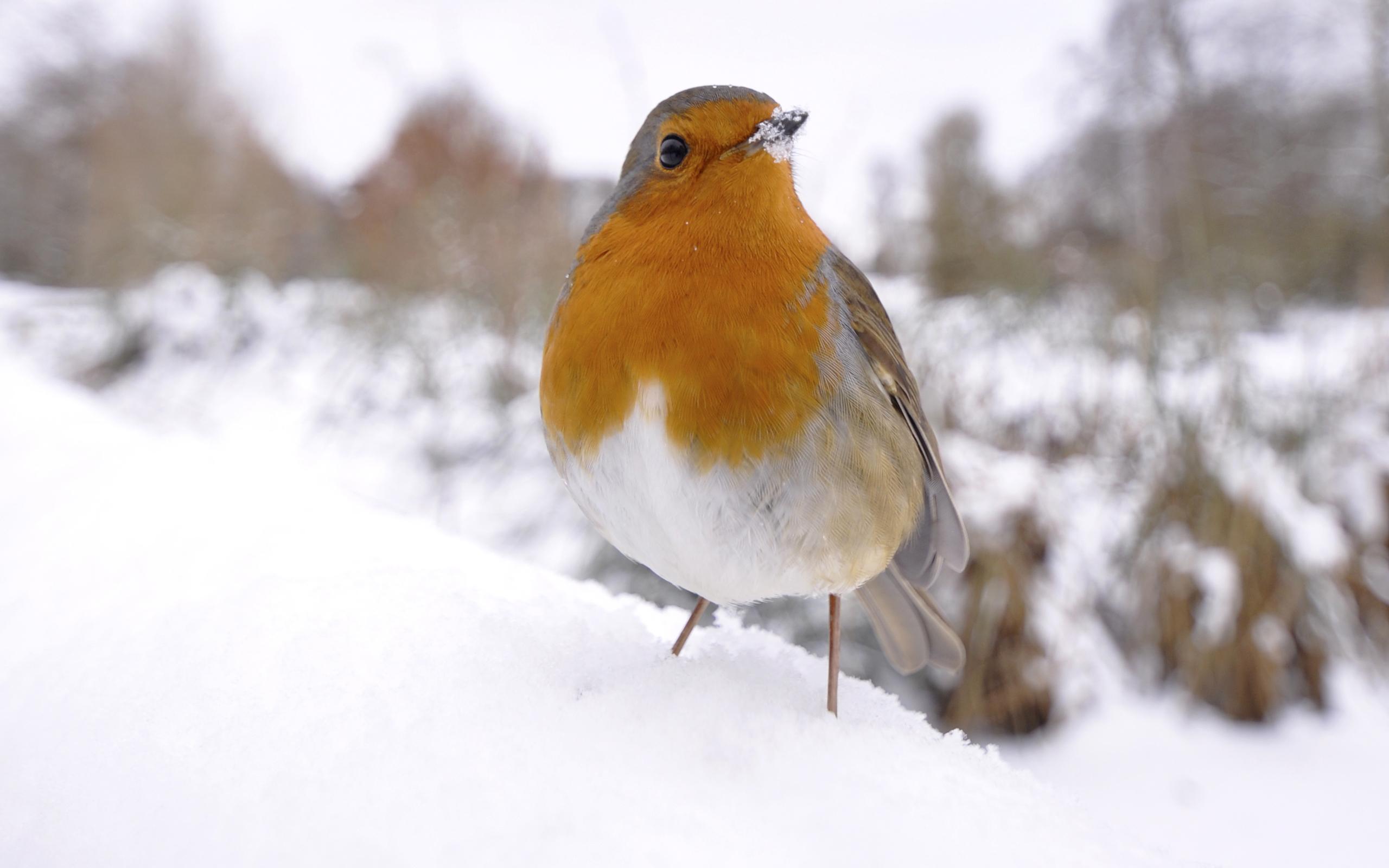 птичка на снегу загрузить