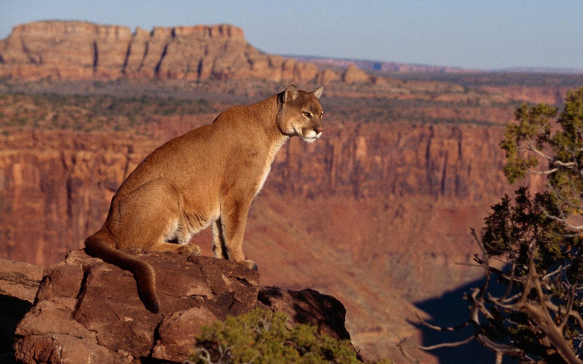 природа животные пустыня  № 3146325  скачать