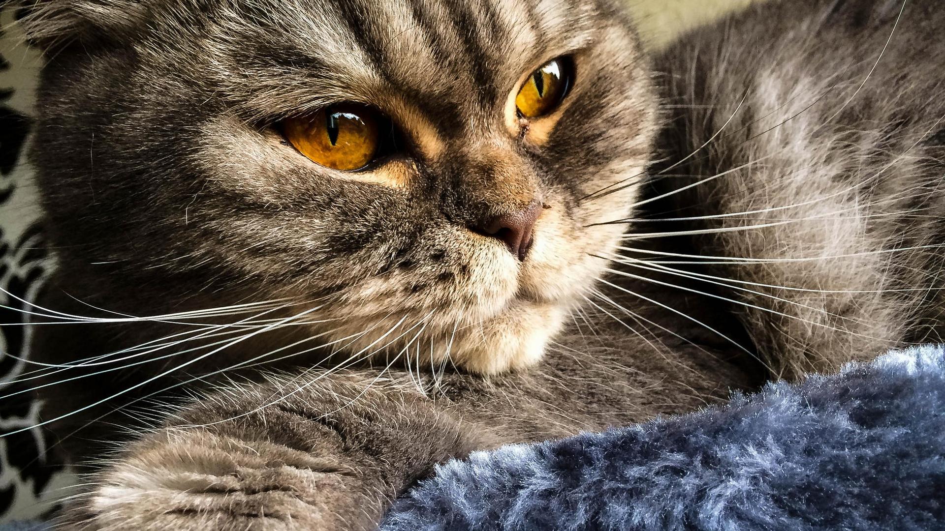 животные кошки смотреть