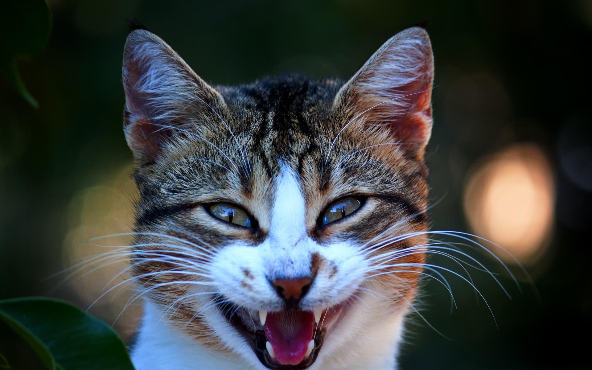 Мне надо, смешные картинки с улыбающимися котами