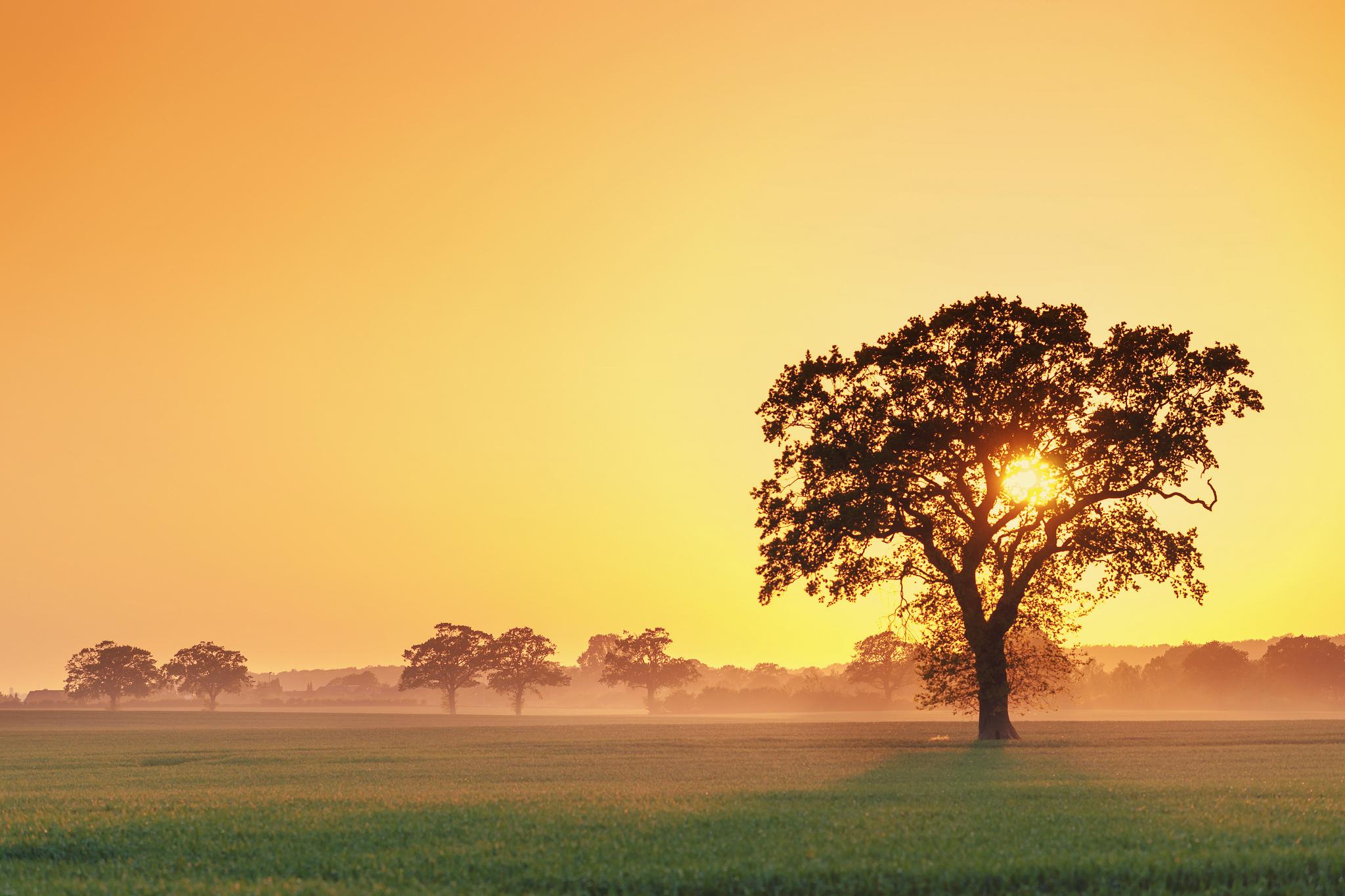 природа закат солнце деревья без смс