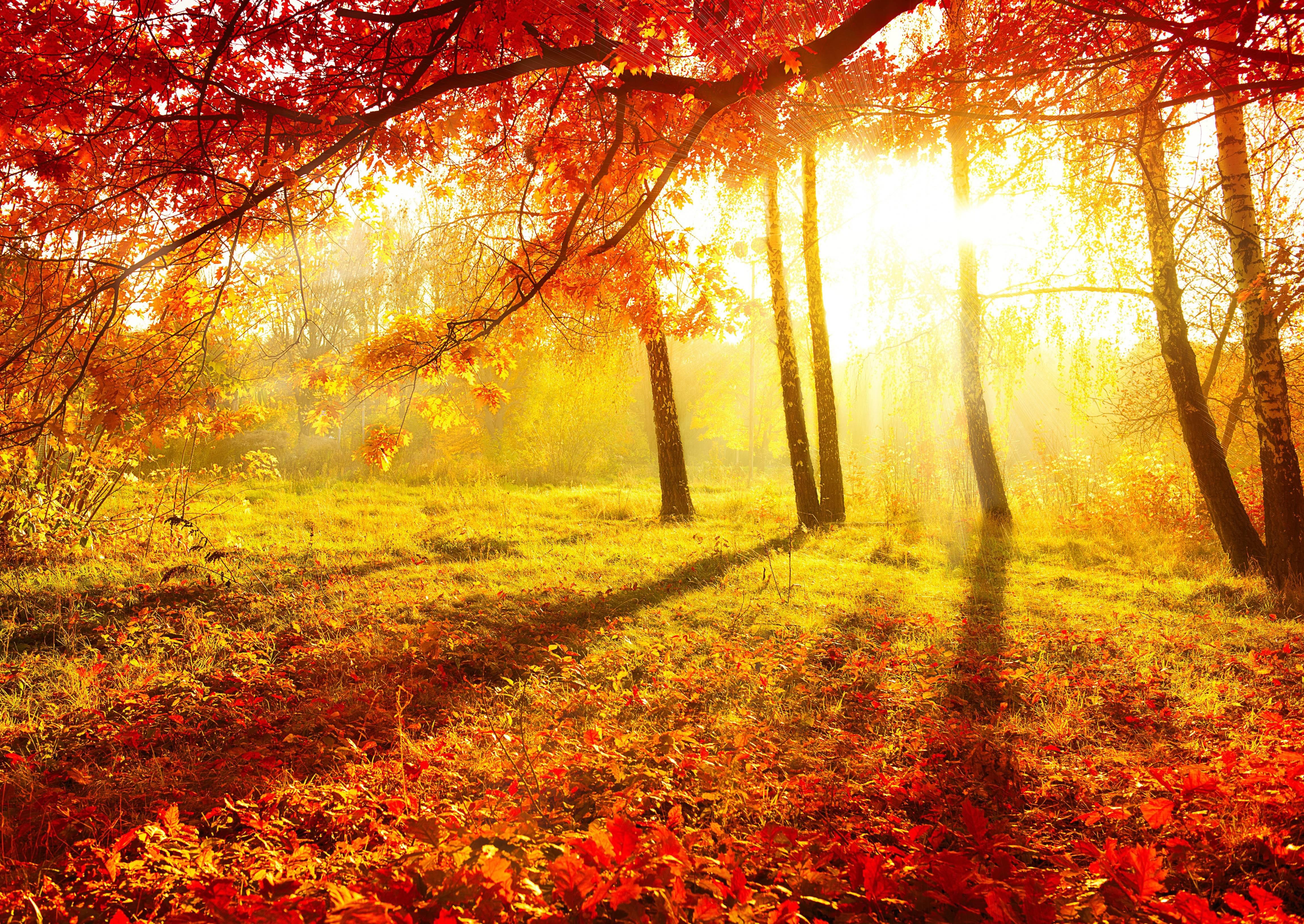 Парк осень солнце без смс