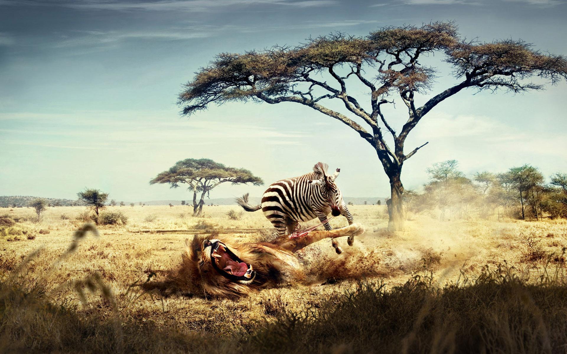 Лев на охоте бесплатно