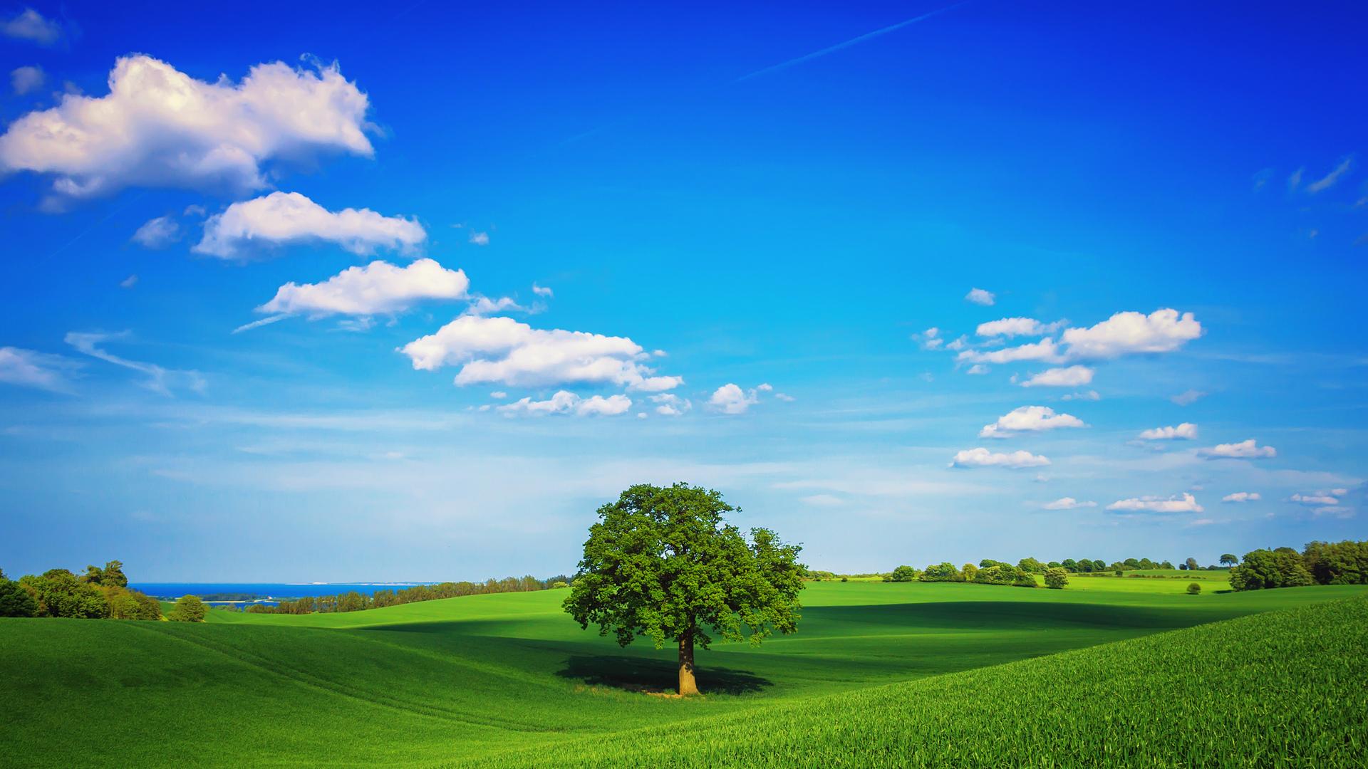 дерево поле  № 439072 загрузить