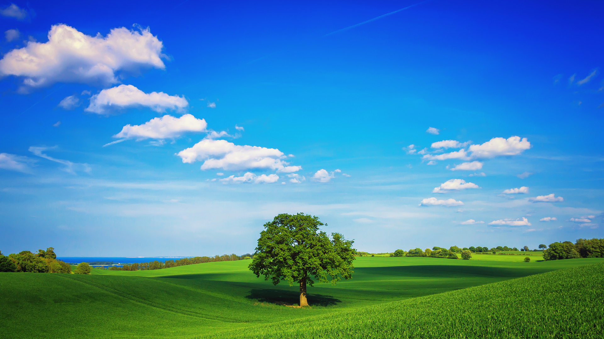 природа небо облака деревья поле nature the sky clouds trees field  № 243716 без смс