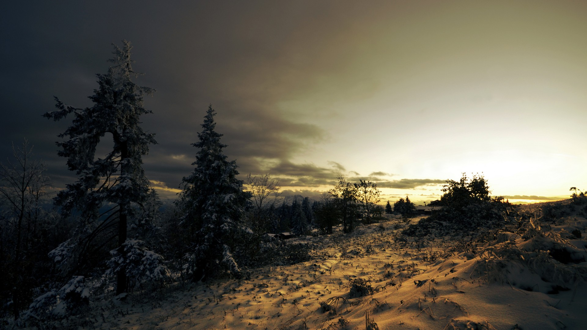 заснеженная растительность на закате  № 1027139  скачать
