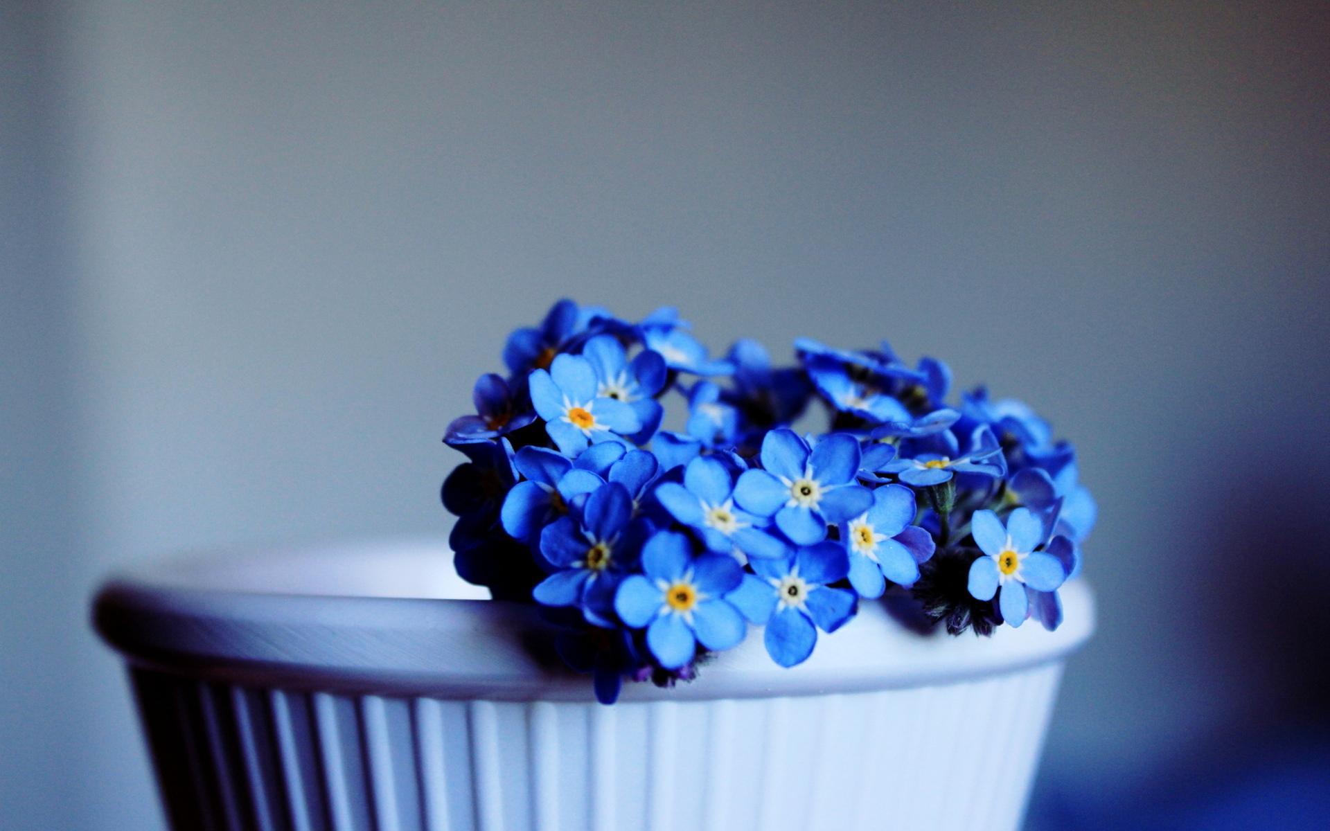 Цветы голубые незабудки  № 1334033 без смс