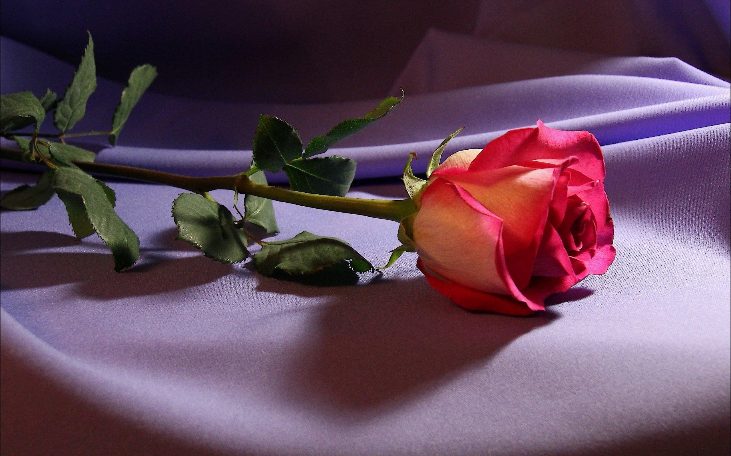 Для тимофея, картинки цветы со словами ты самая красивая