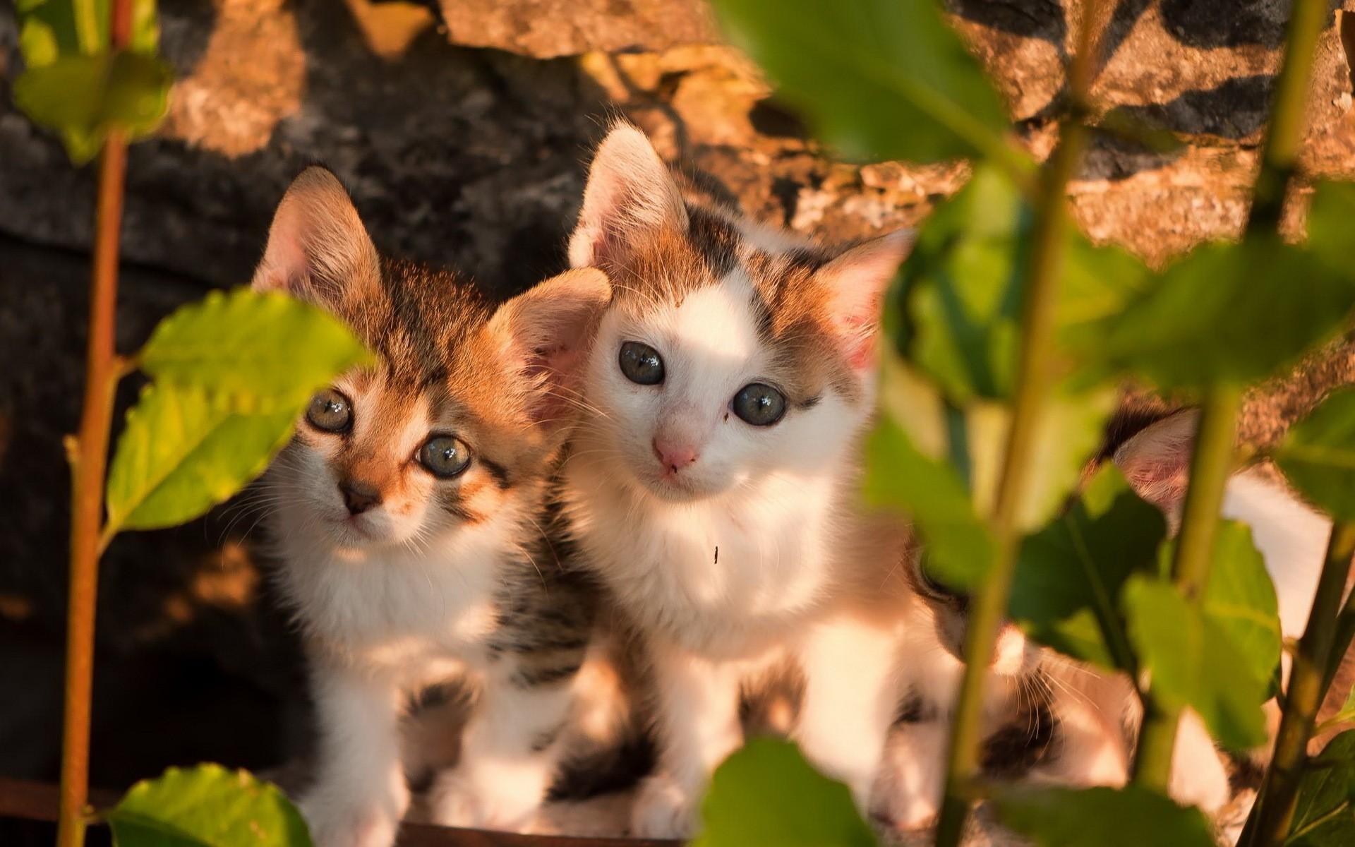 природа животное котенок кот  № 1981147  скачать
