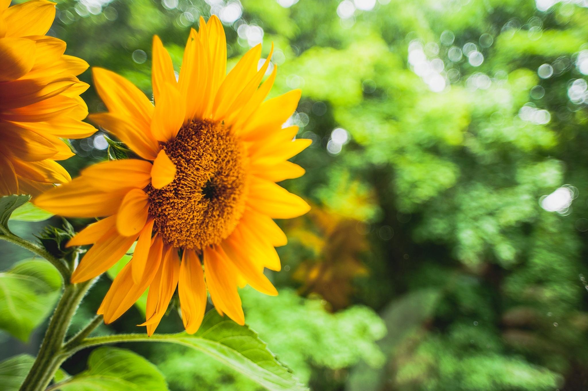 Желтый цветок в зеленой траве загрузить
