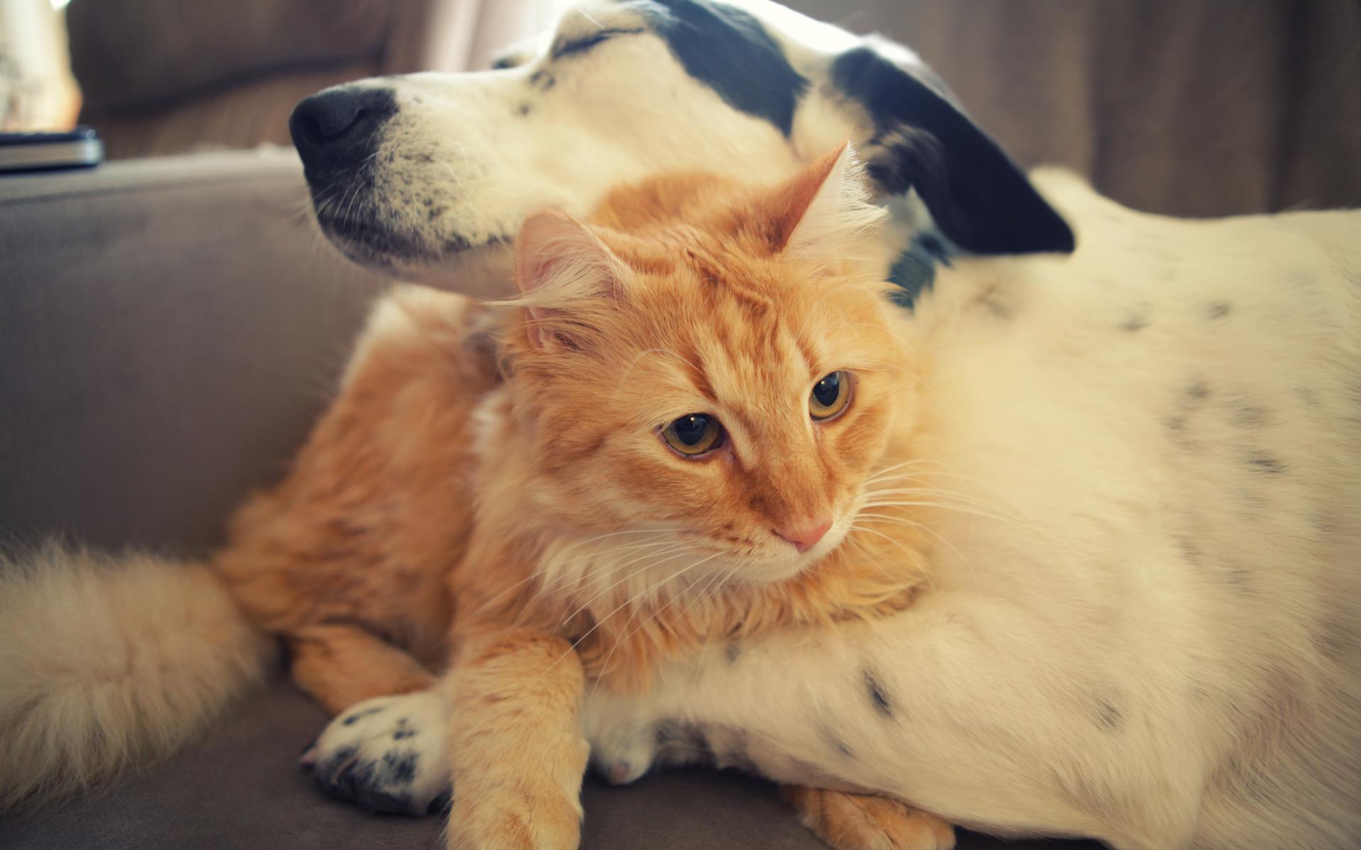 Смешные котики с собаками