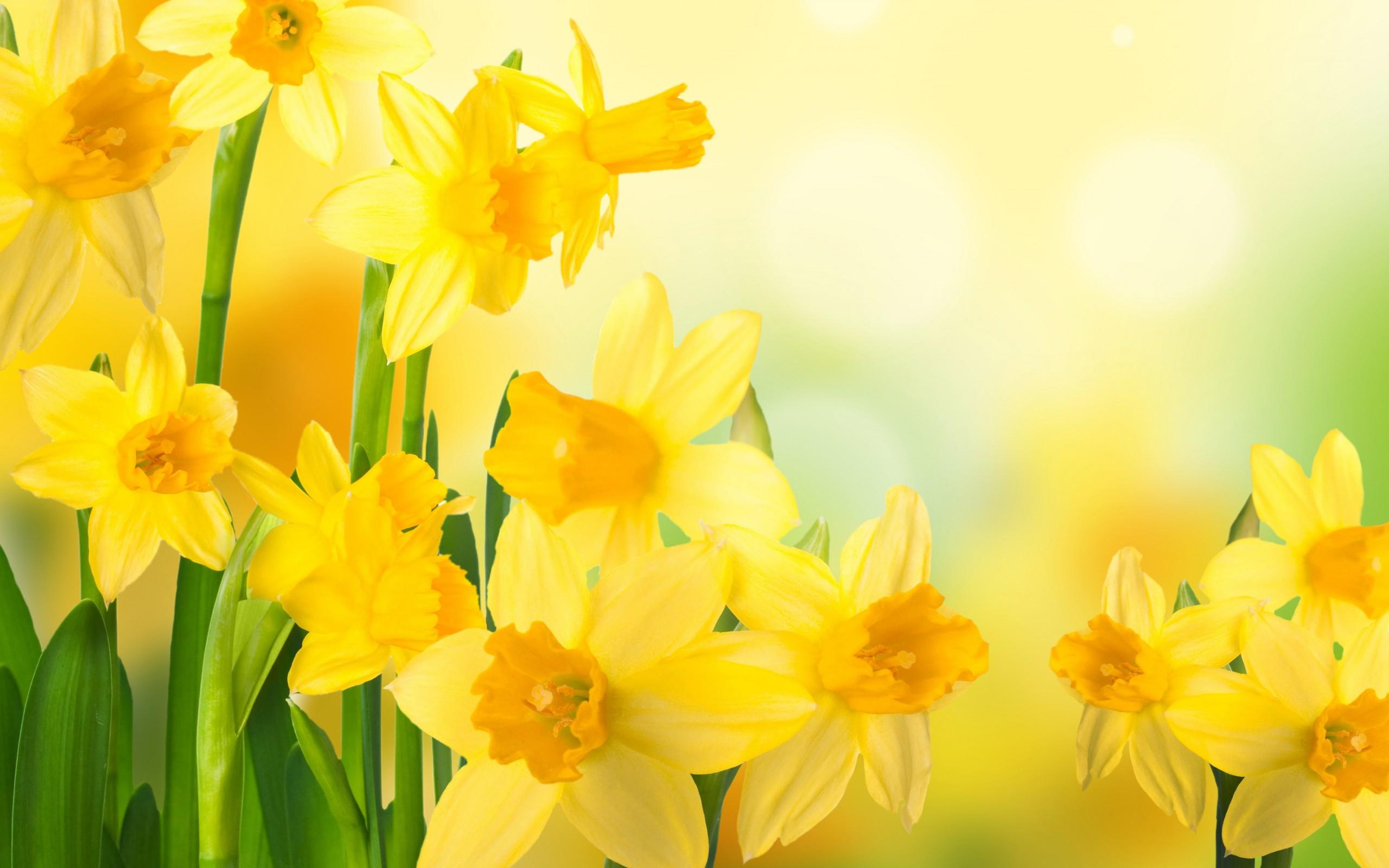 Дню, фон для поздравления желтый