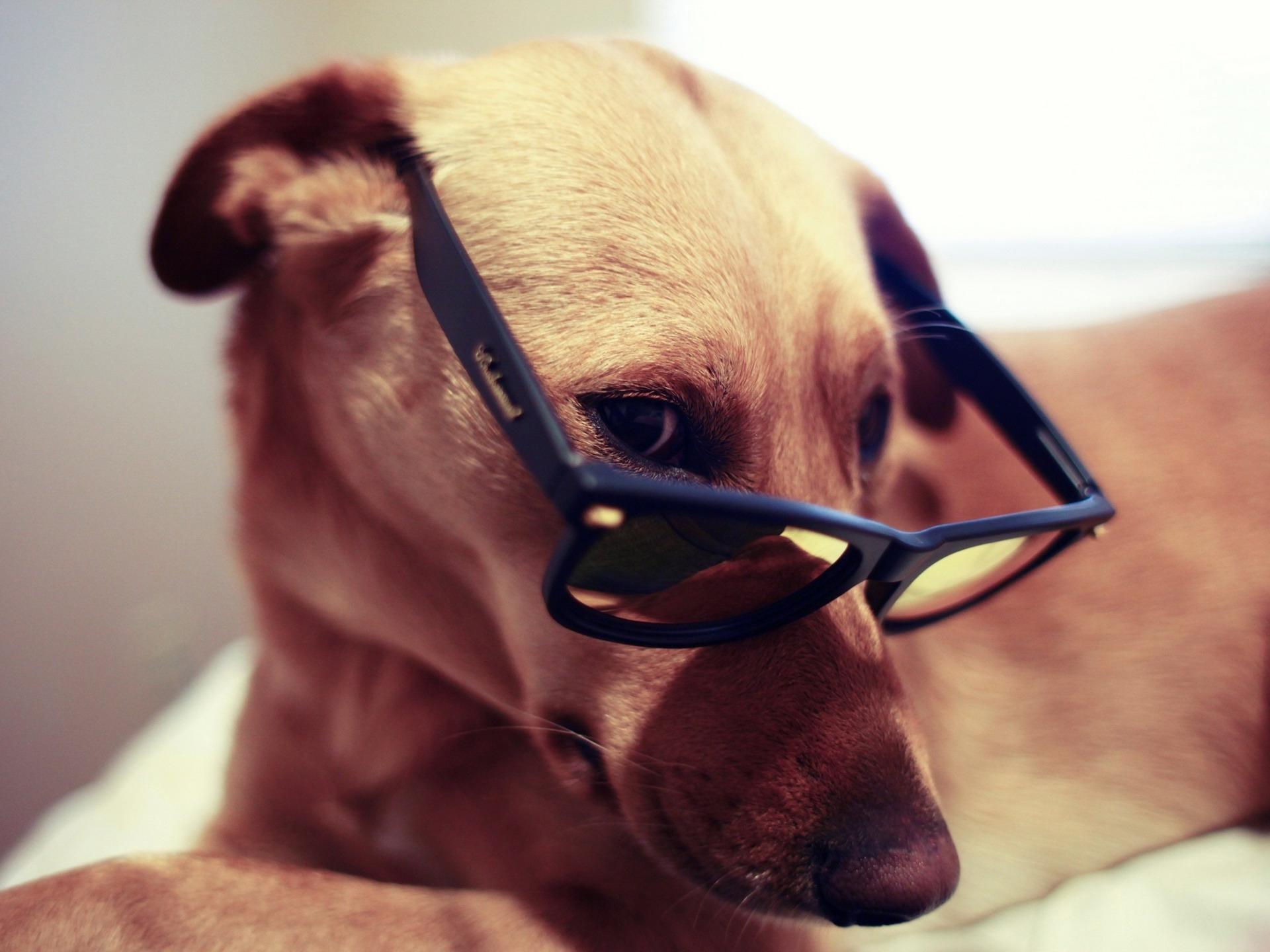 Картинка с псом в очках, добрым