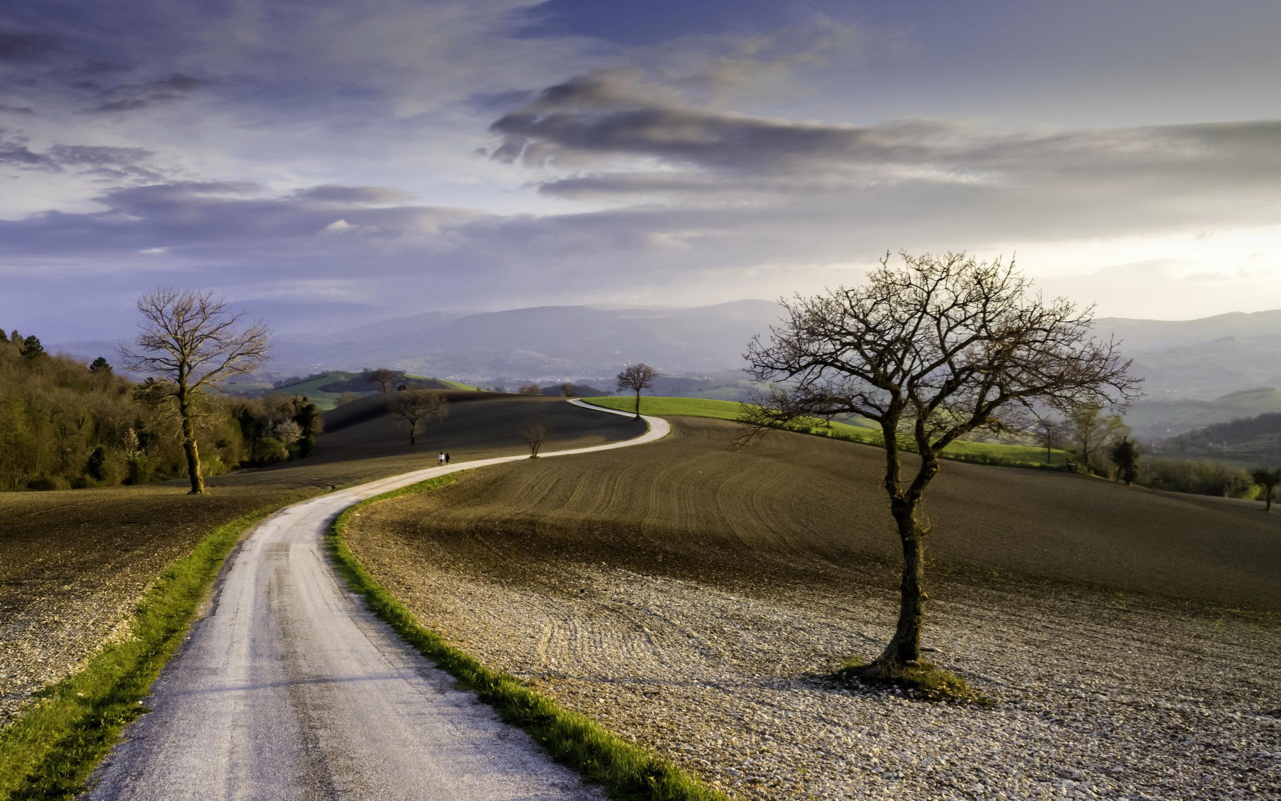 Дорога вдоль олеи меж полями без смс