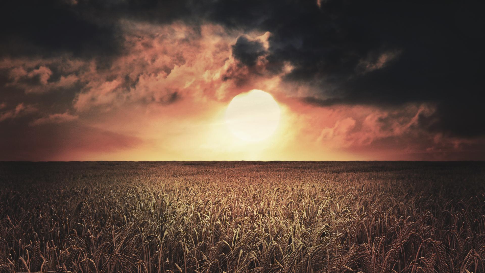Солнце перед закатом на поле скачать