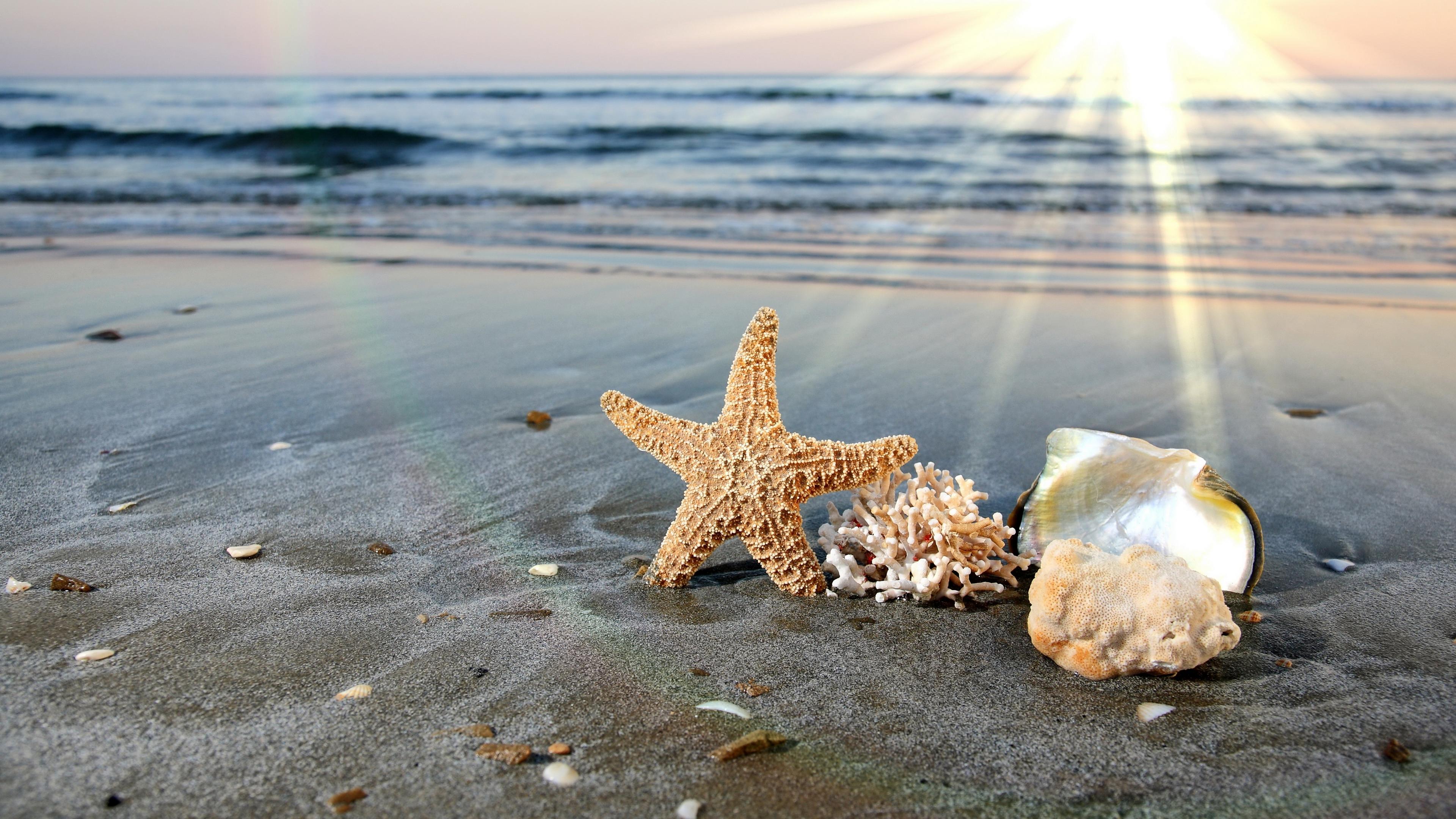 природа горизонт море морская звезда без смс