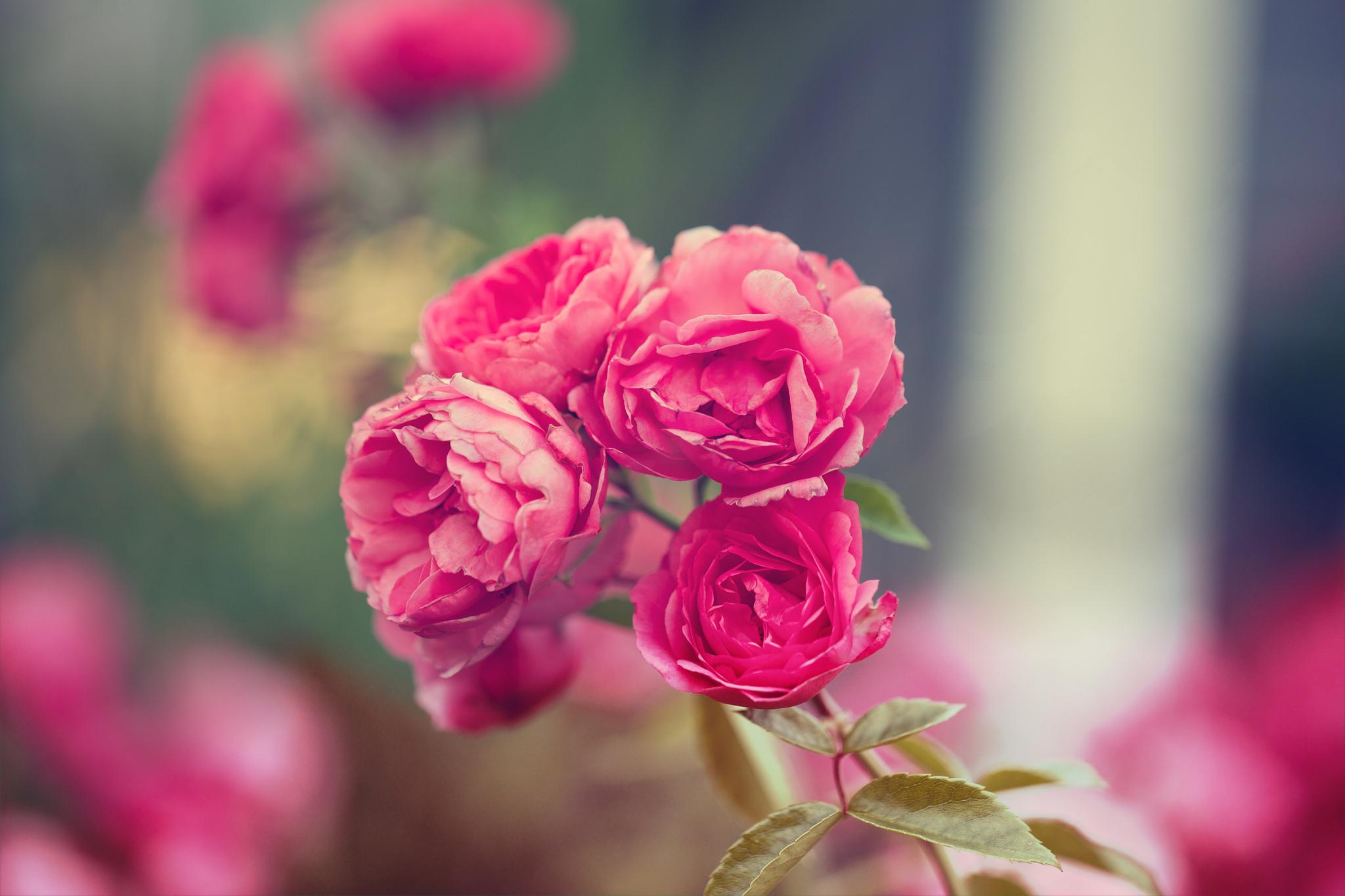 корзина цветы картинки размер 2048 1152 опубликованных материалах содержатся