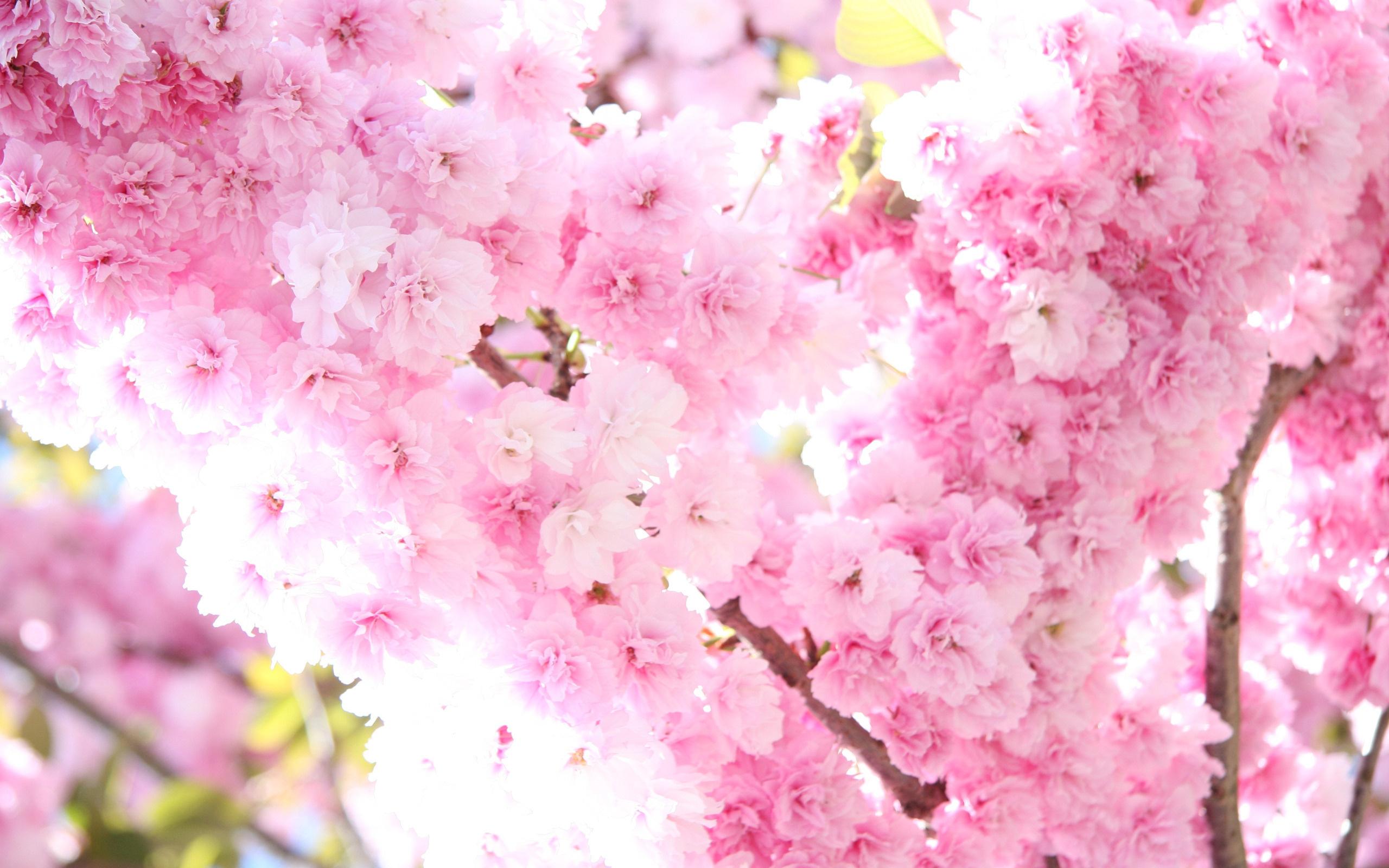 Открытка годовщине, картинки с цветами сакуры