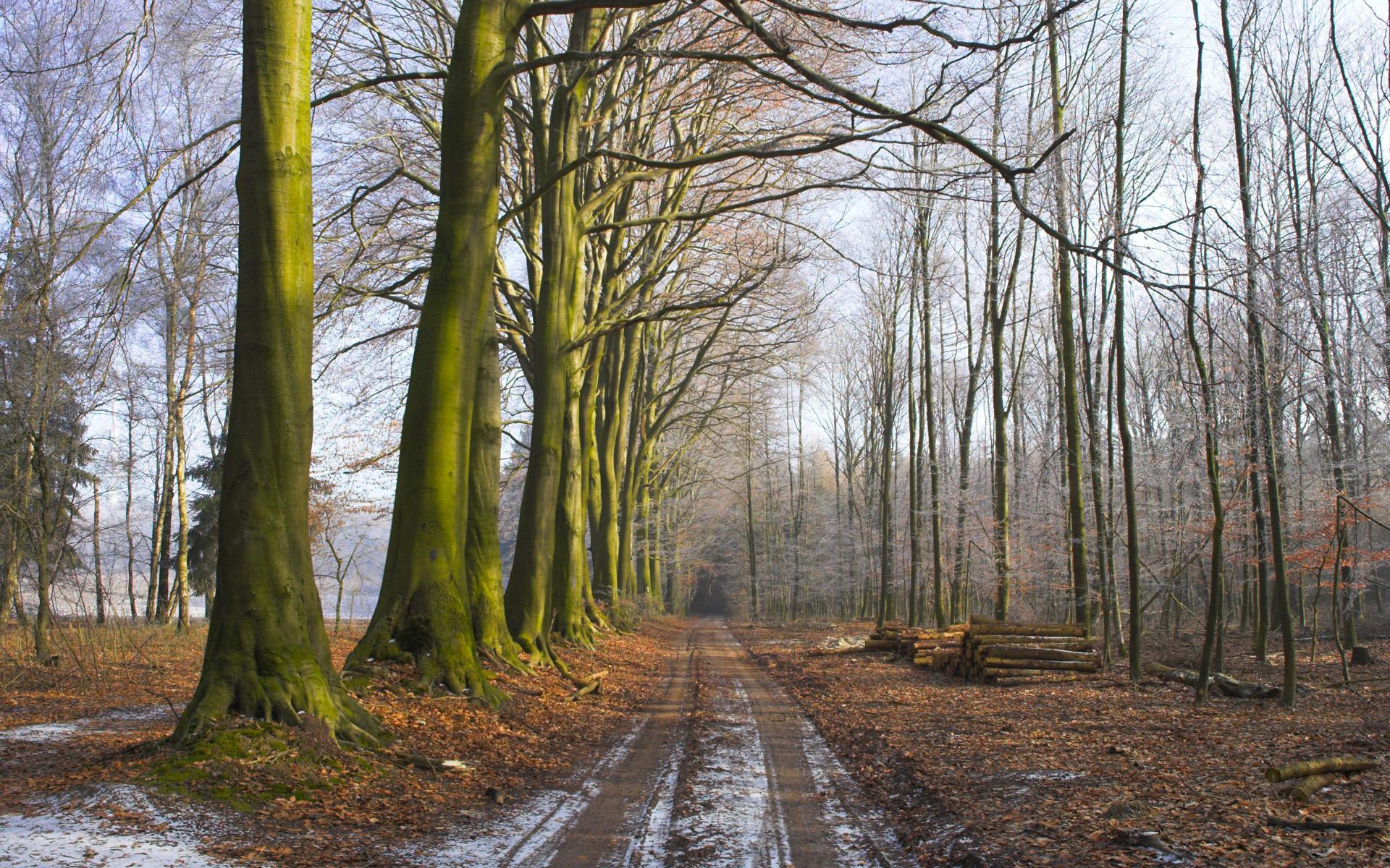 Дорога березы аллея скачать