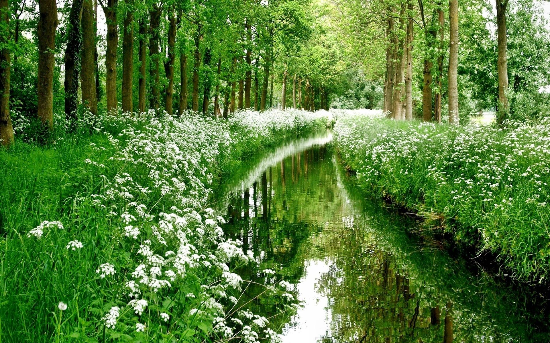 картинка на рабочий стол лето природа ручьи
