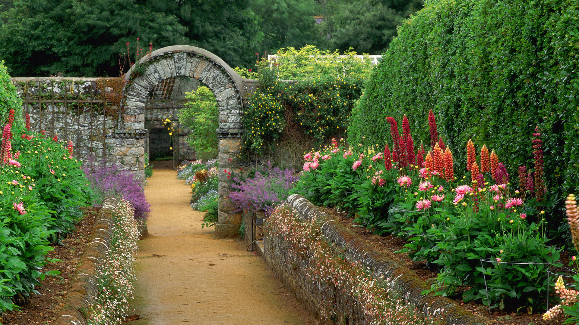 цветы аллея ступеньки flowers alley steps загрузить