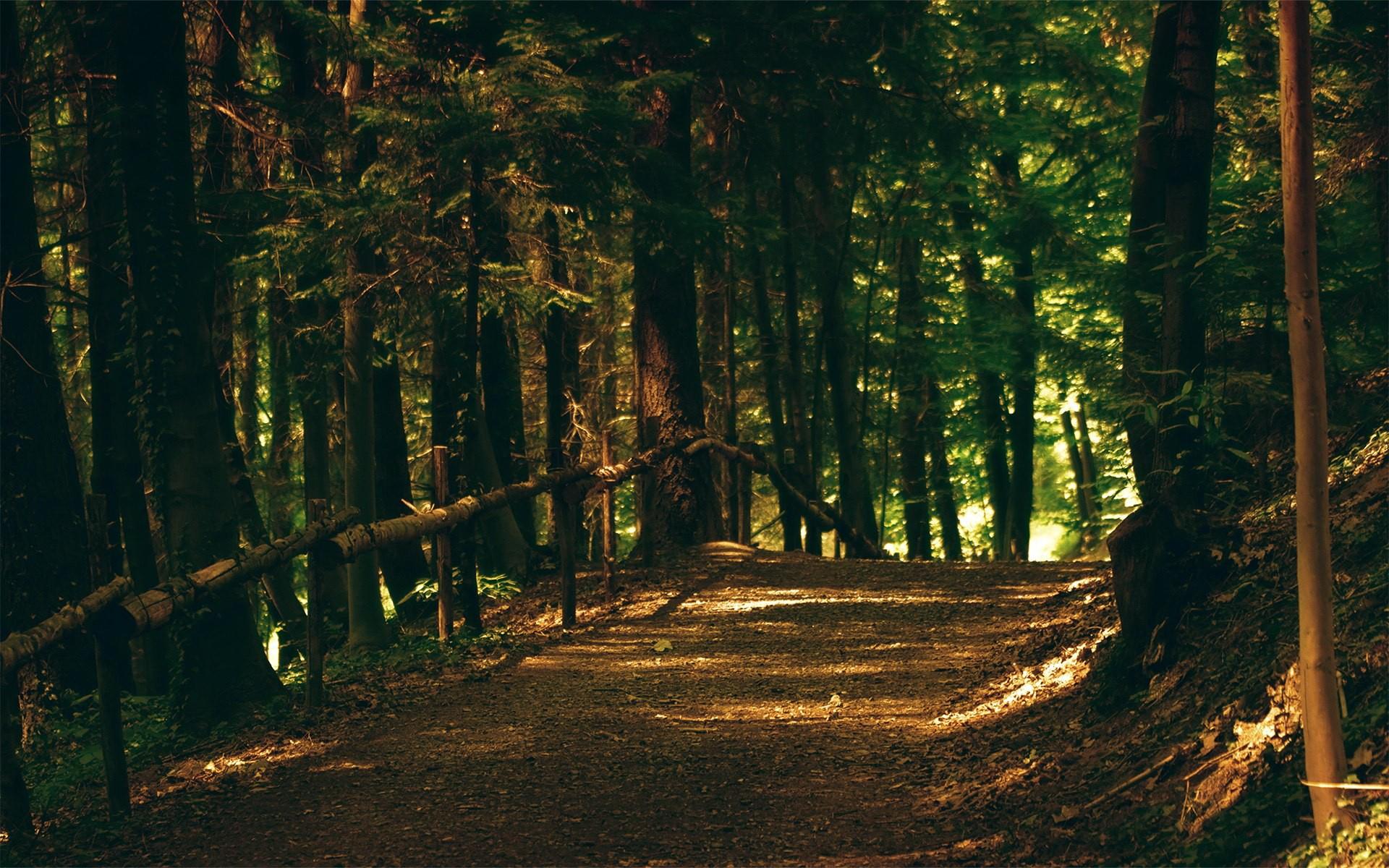 Картинка с лесом для фотошопа, спокойной ночи любимая
