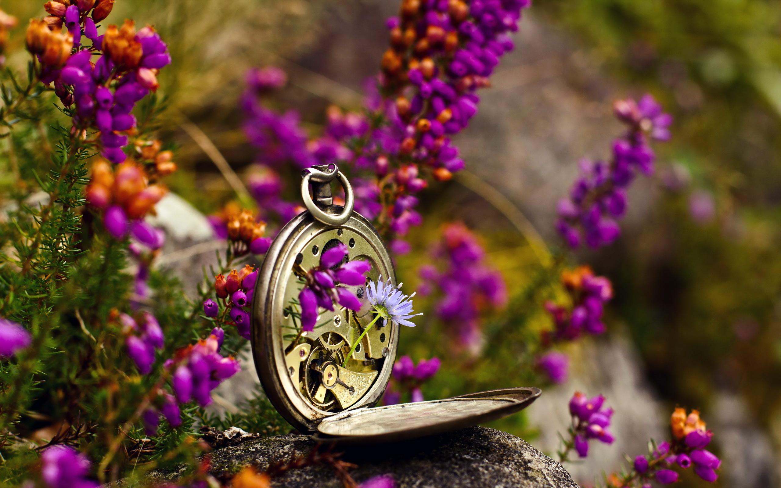 природа цветы часы  № 1520681  скачать