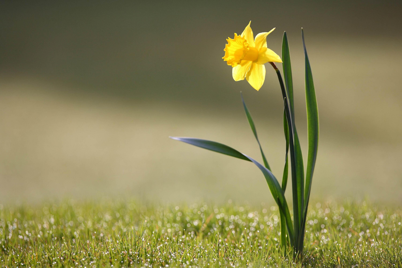 Желтый распустившийся цветок  № 731731 без смс