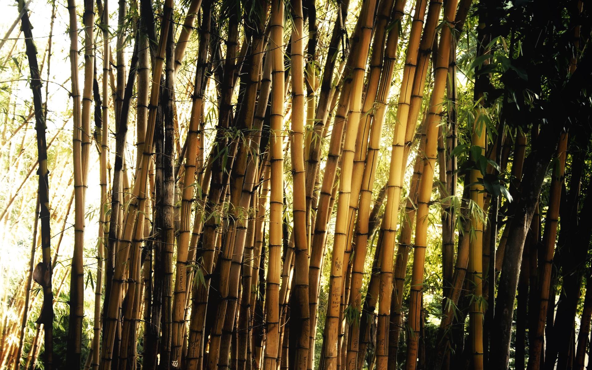 картинка с бамбуком исключено