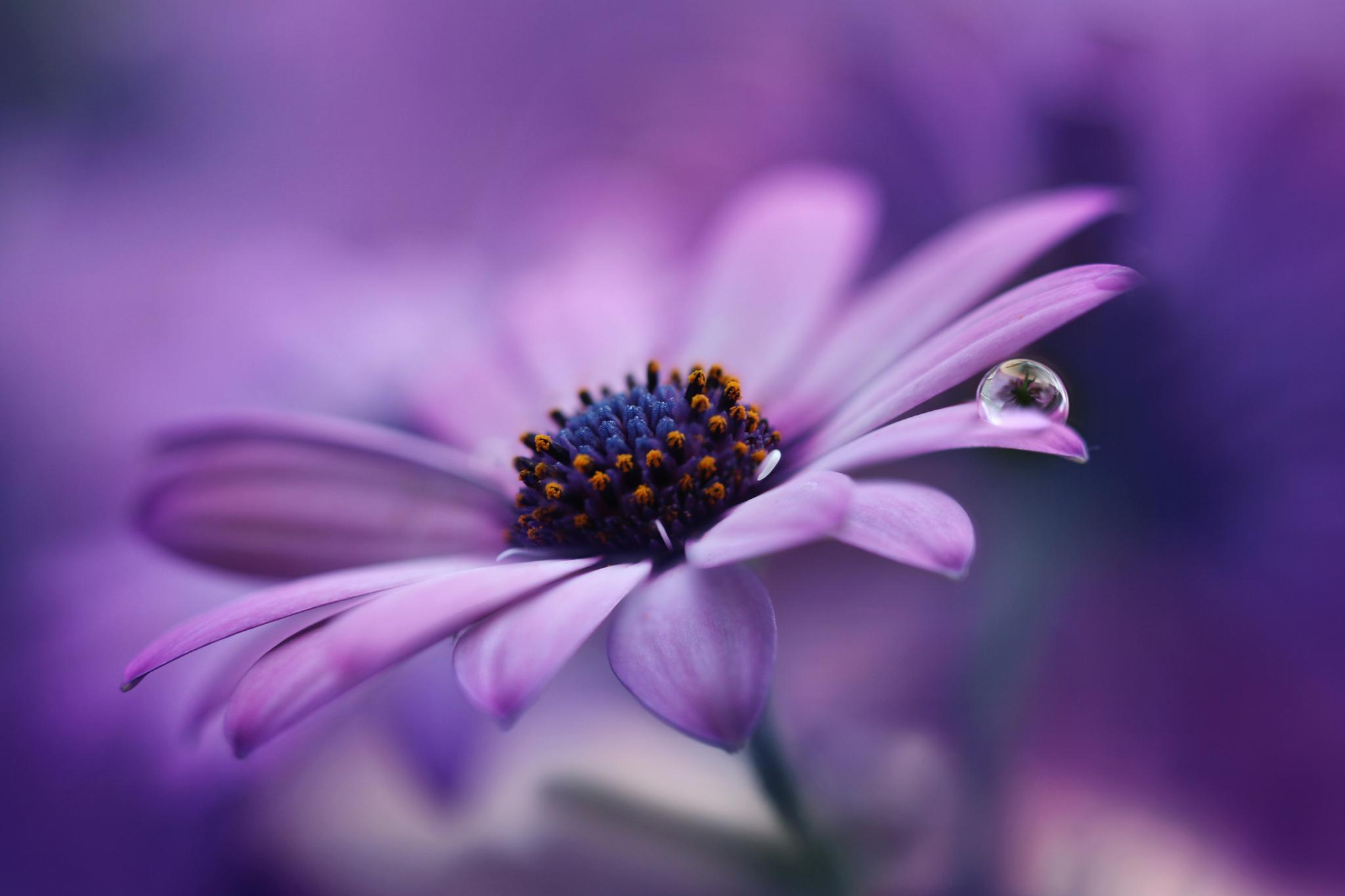 цветок фиолетовый  № 814239 загрузить