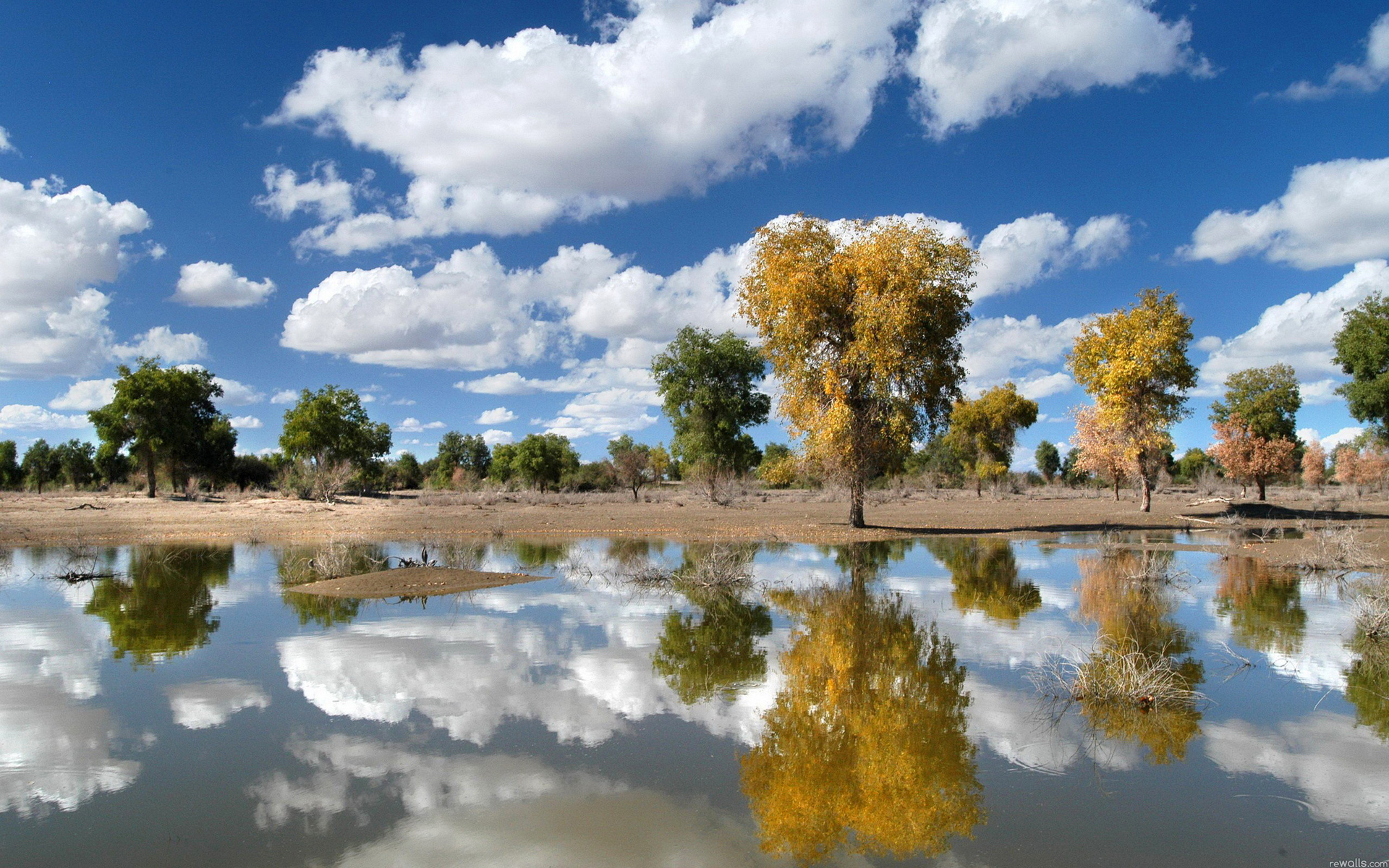 деревья небо озеро  № 3165881 без смс