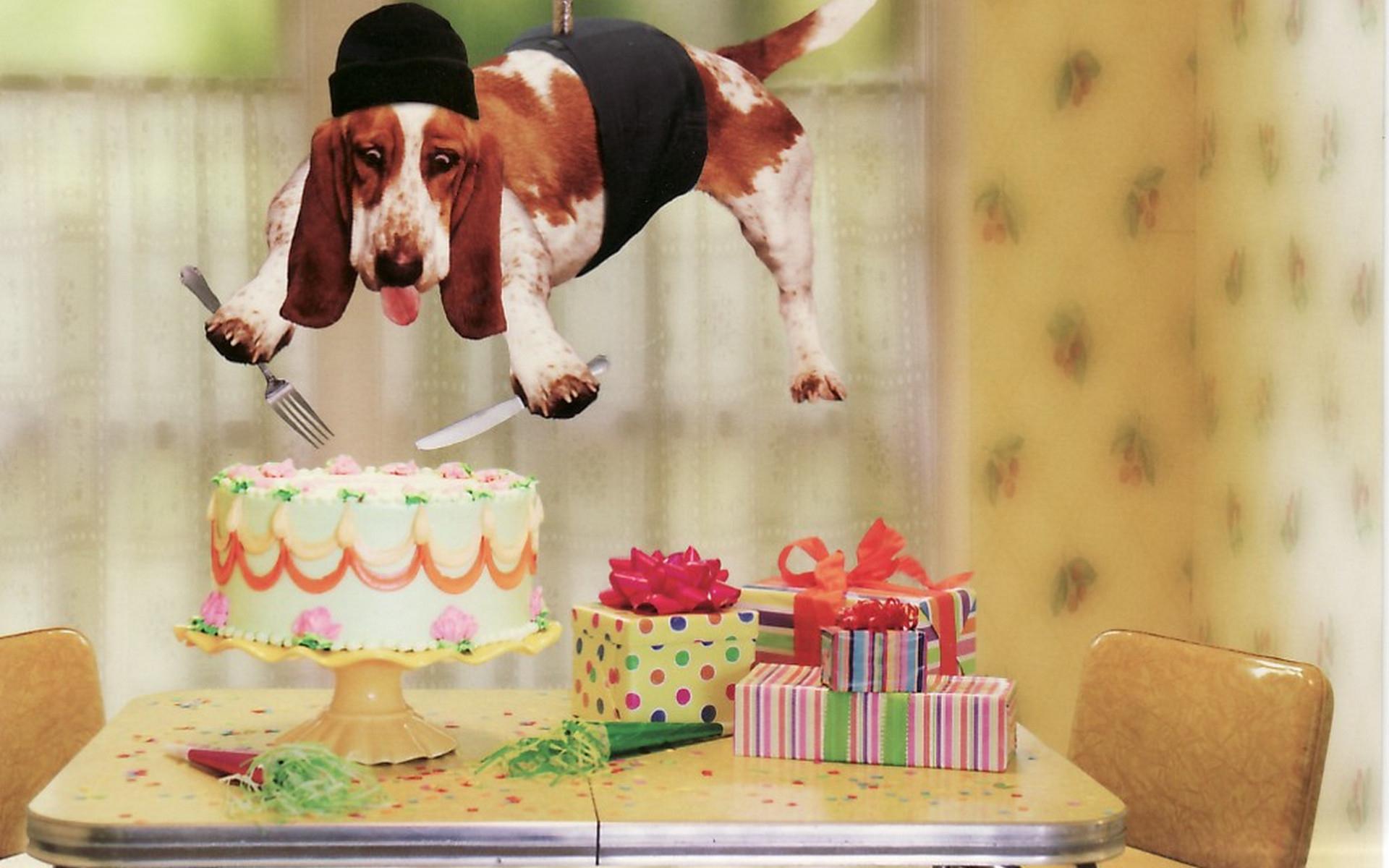Открытки к дню рождения с собаками