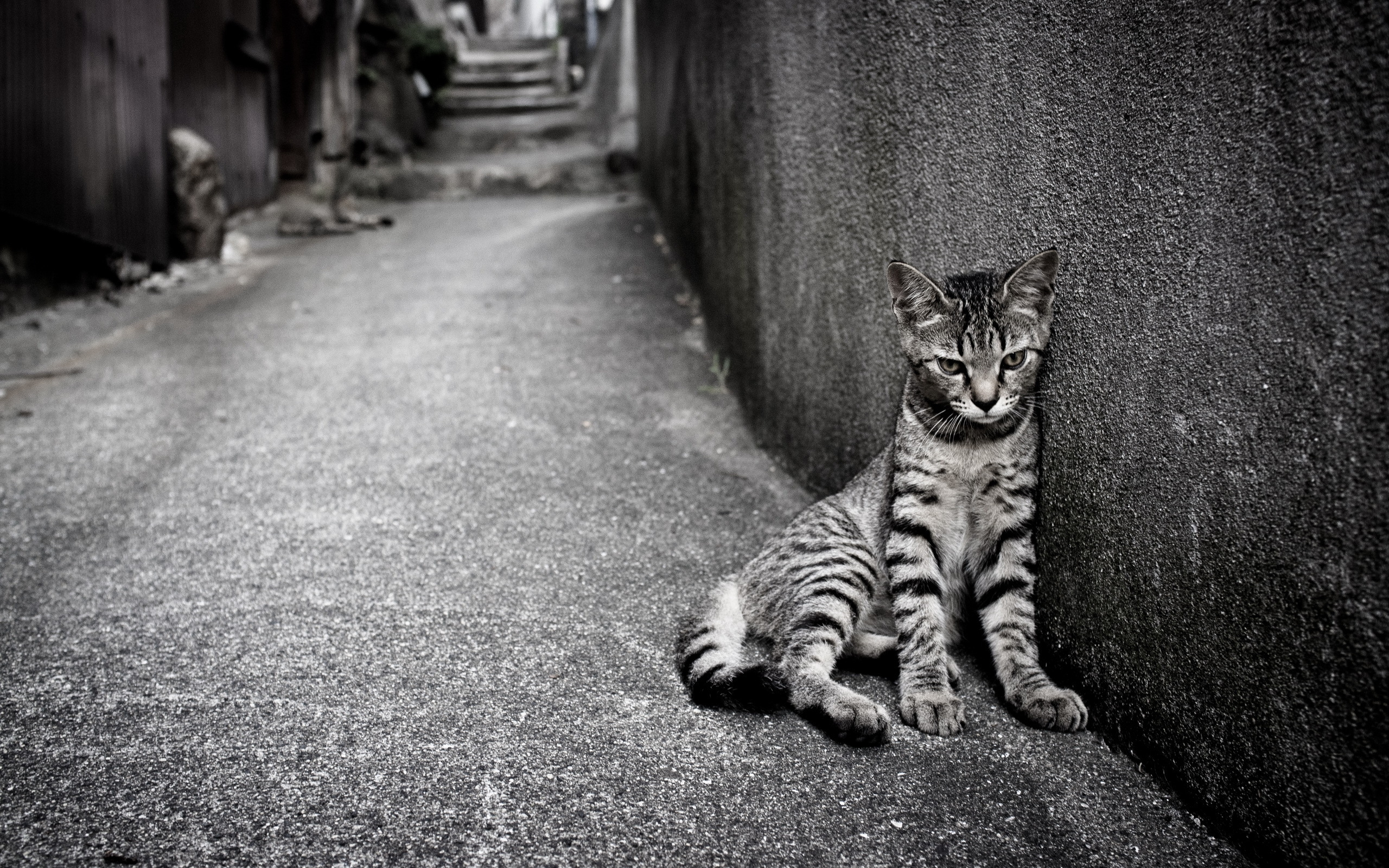 грустный кот дождь анимация бесплатно