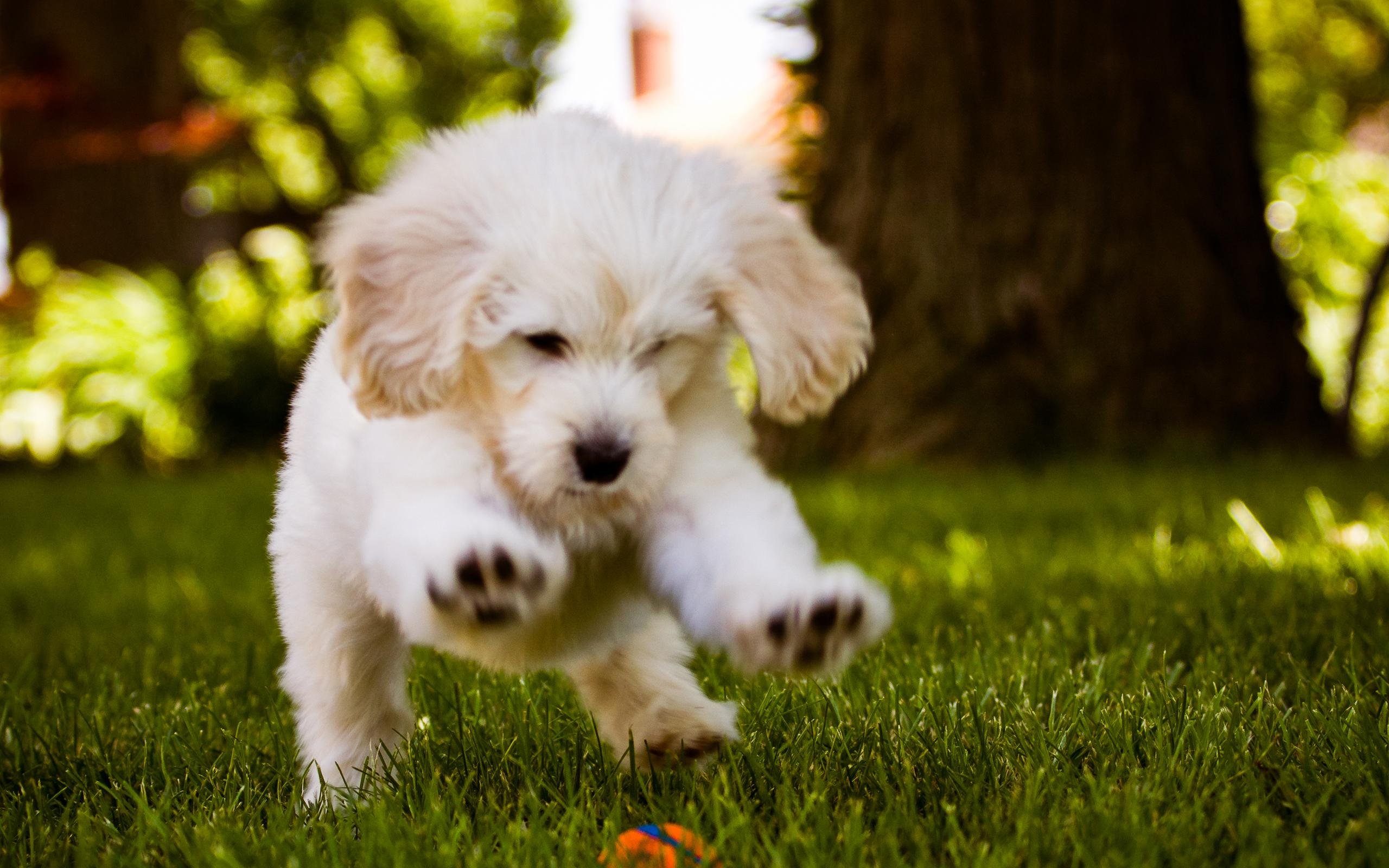 собака щенок dog puppy скачать