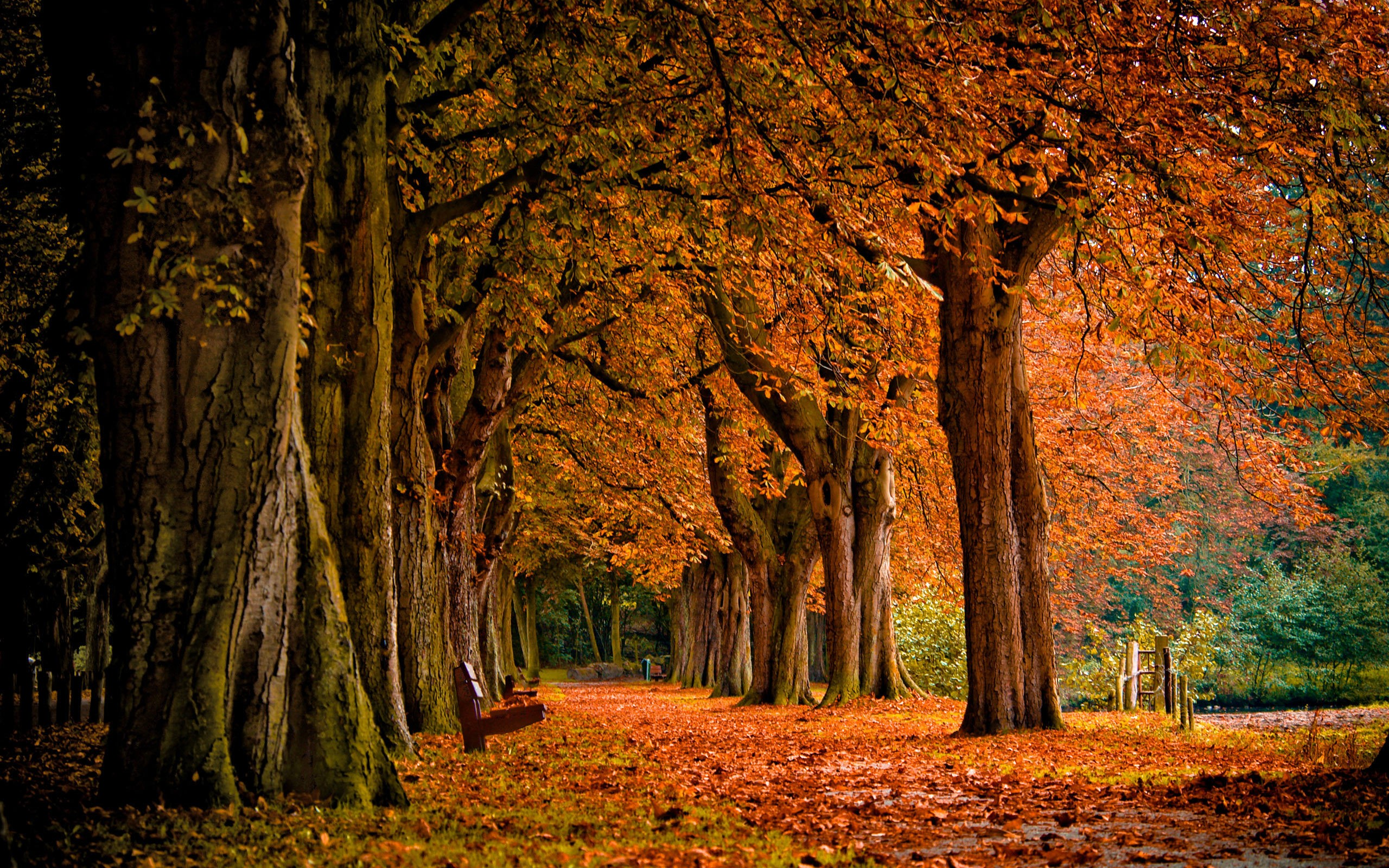Картинки на рабочий стол природа осень