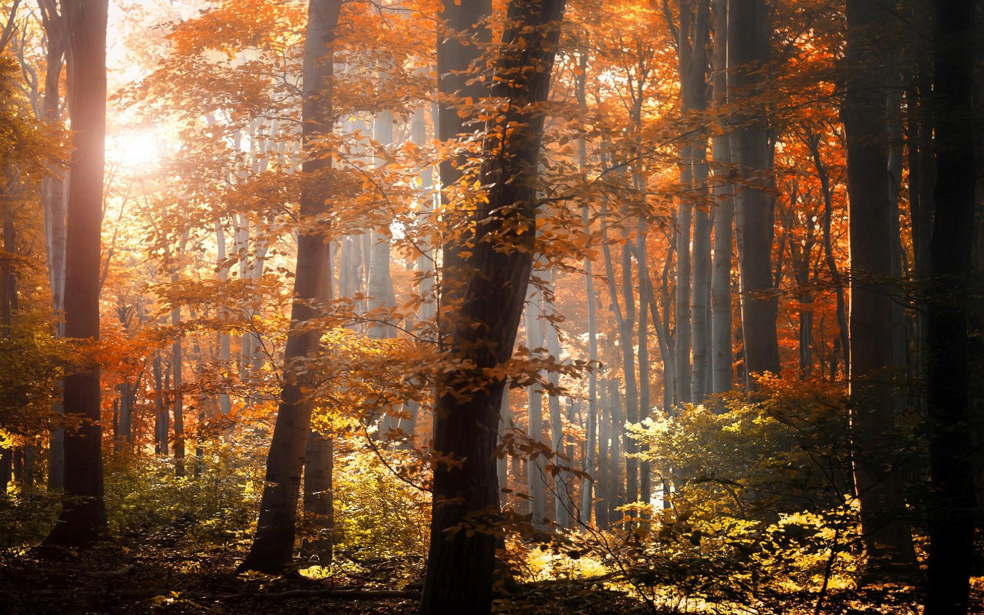 Осенний лиственный лес  № 3193603 загрузить