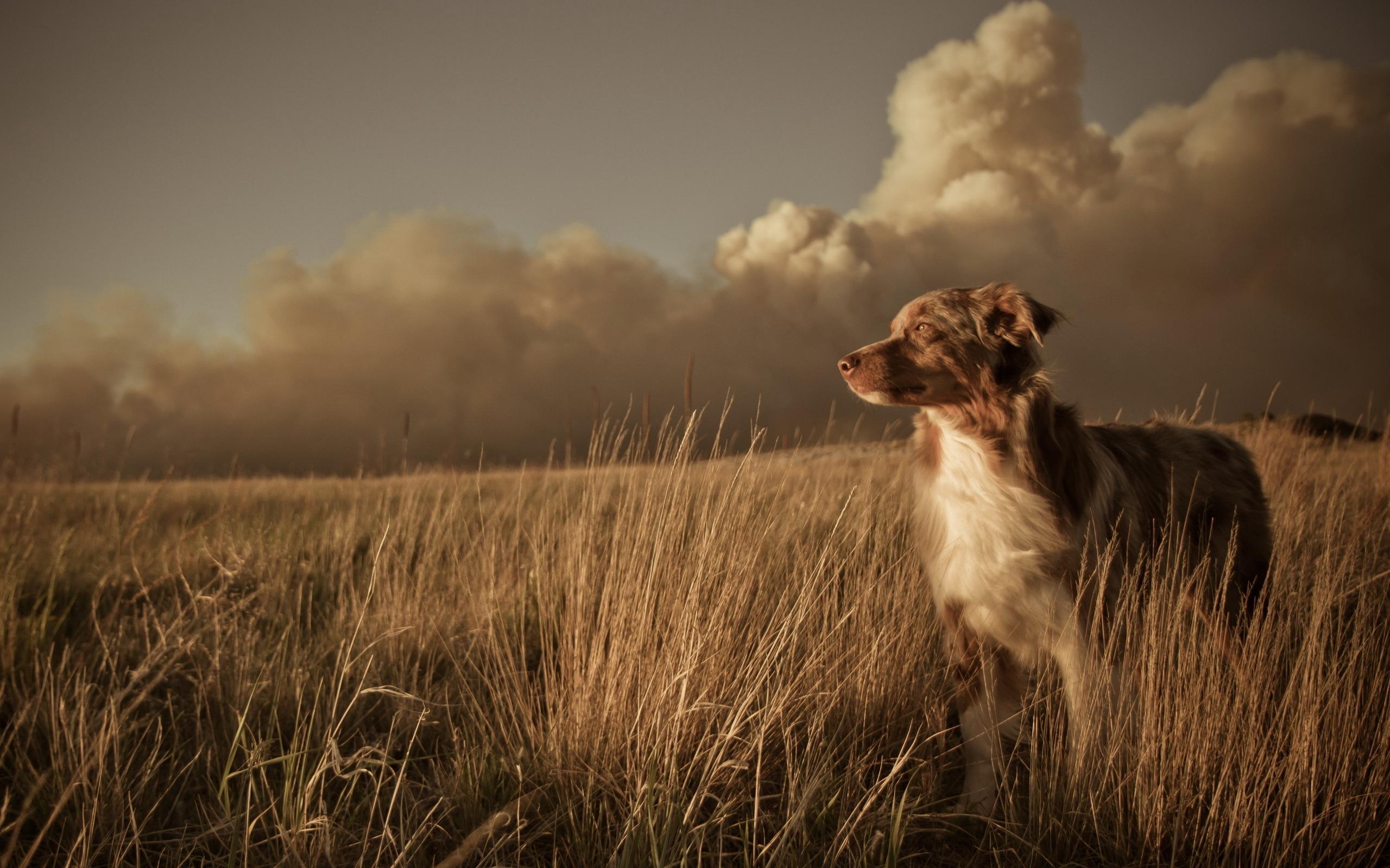 Собака в поле загрузить