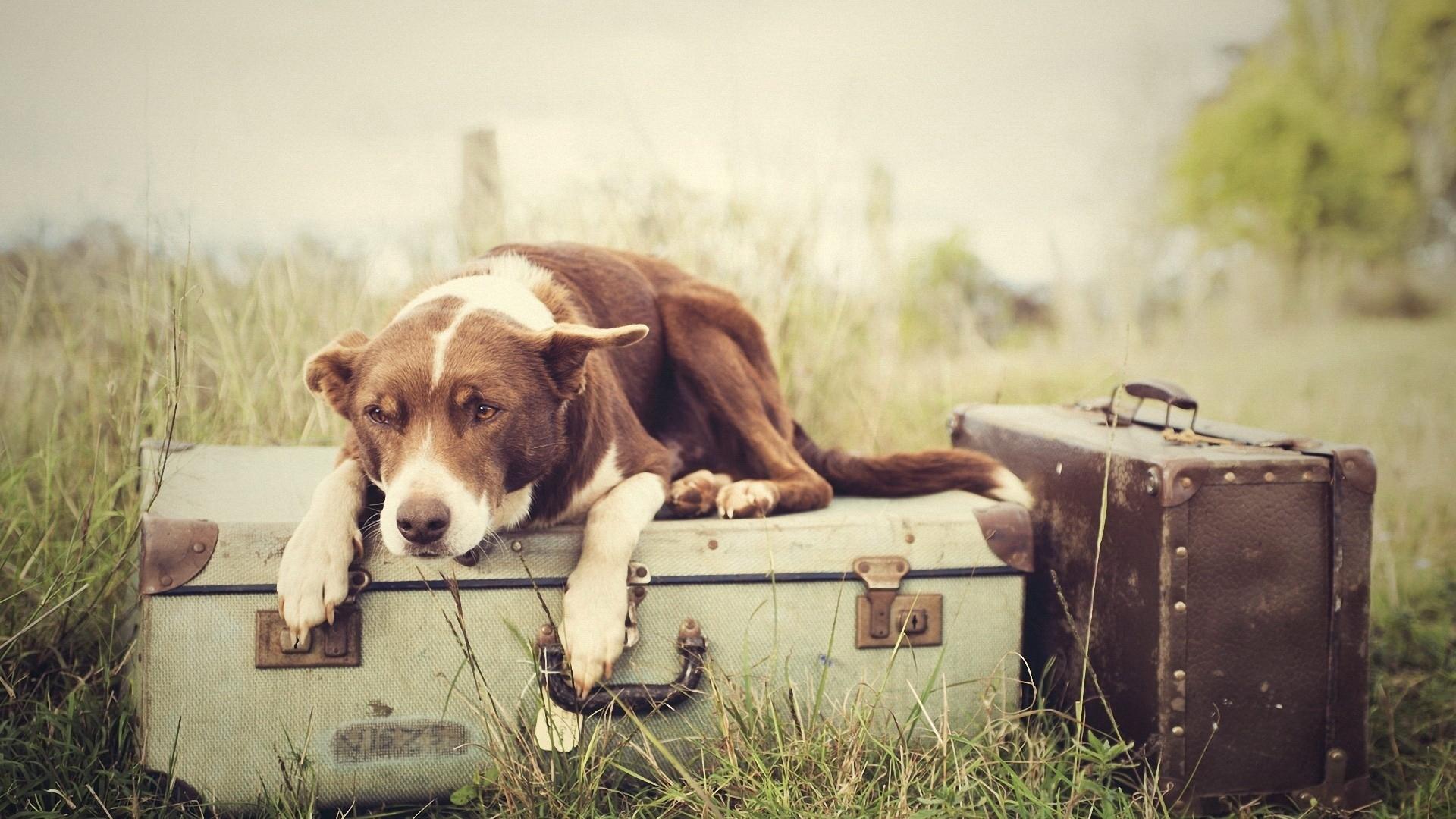 природа собака животное гитара без регистрации