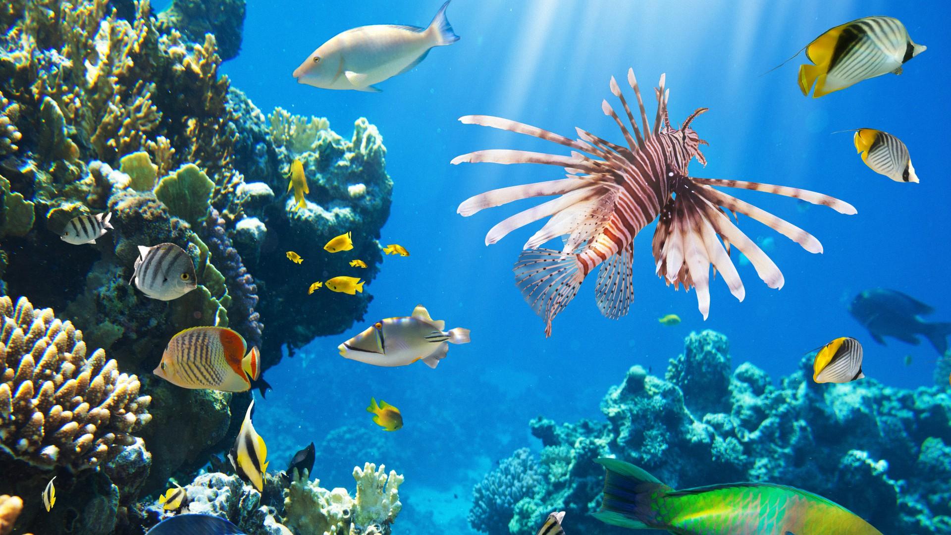 фотографии высокого качества подводный мир добровольцев