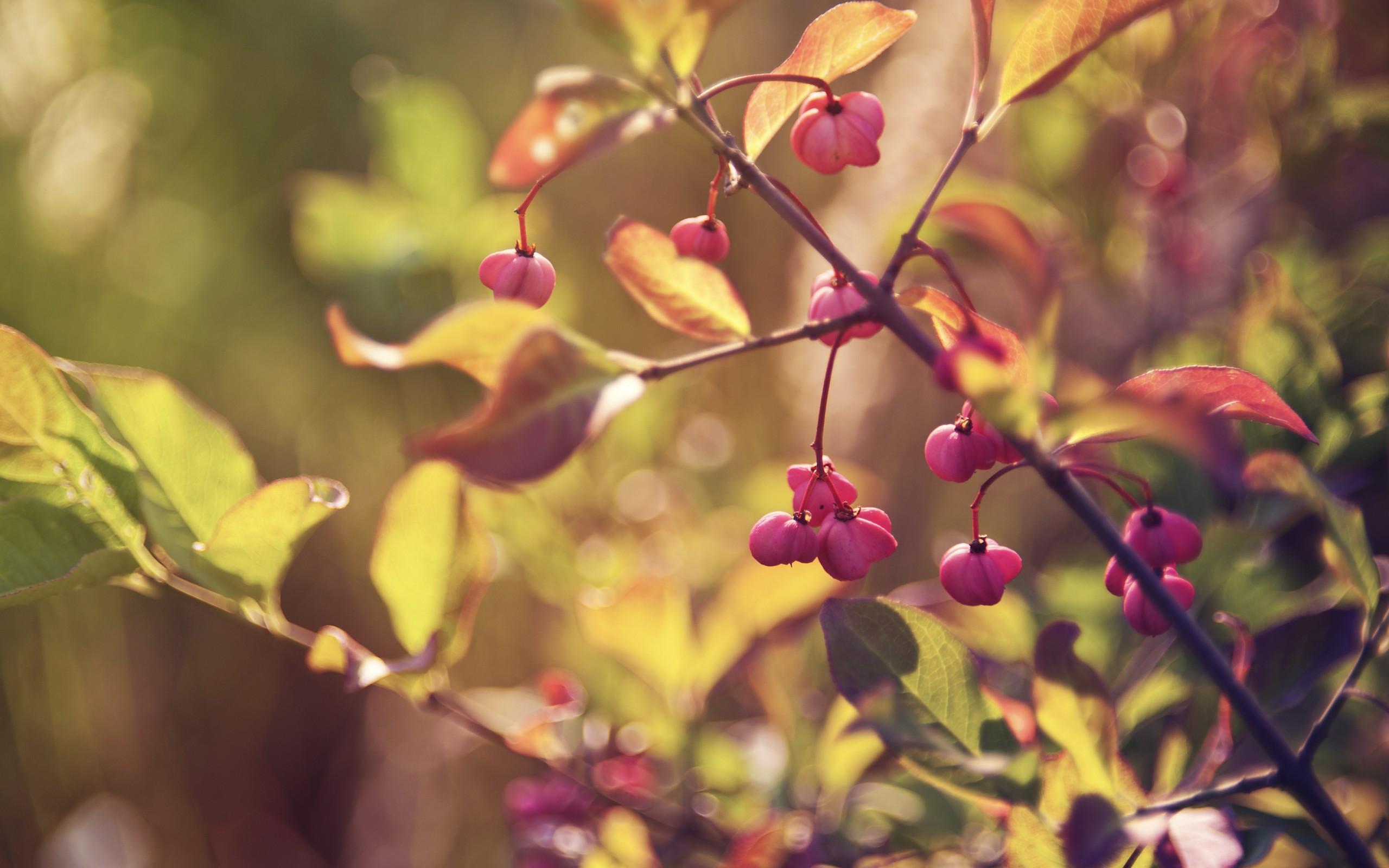 девушка осенние листь ягоды бесплатно