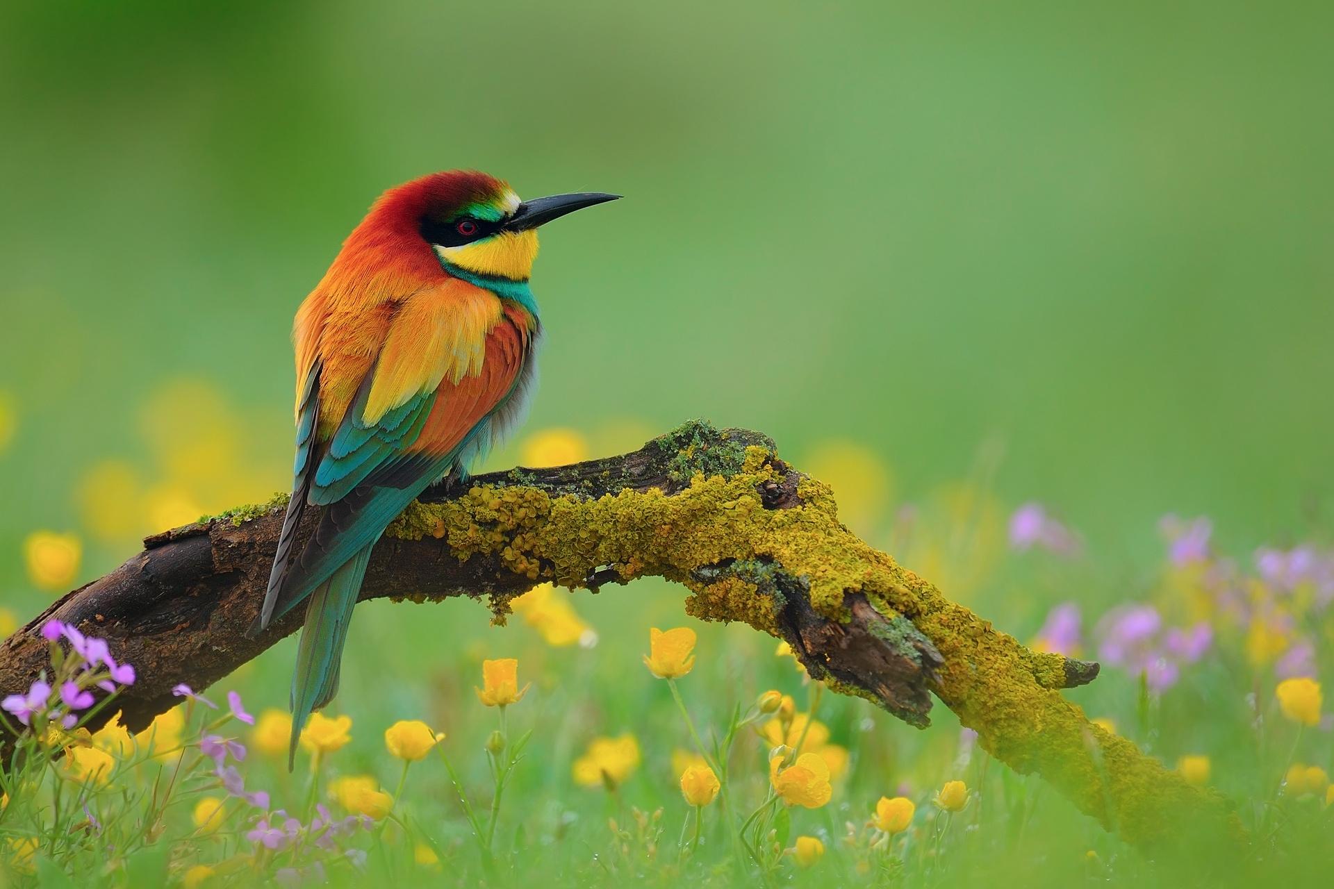 Желтая птичка на мхе без смс