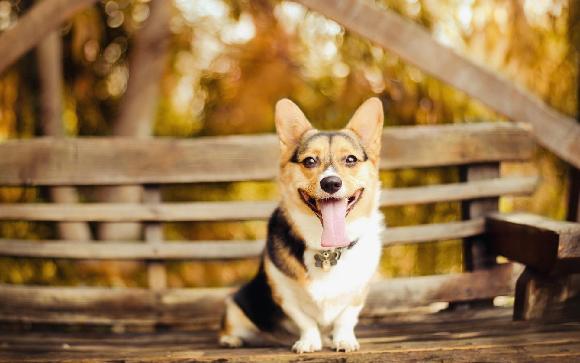 пёс язык собака на бревне  № 2524072 без смс
